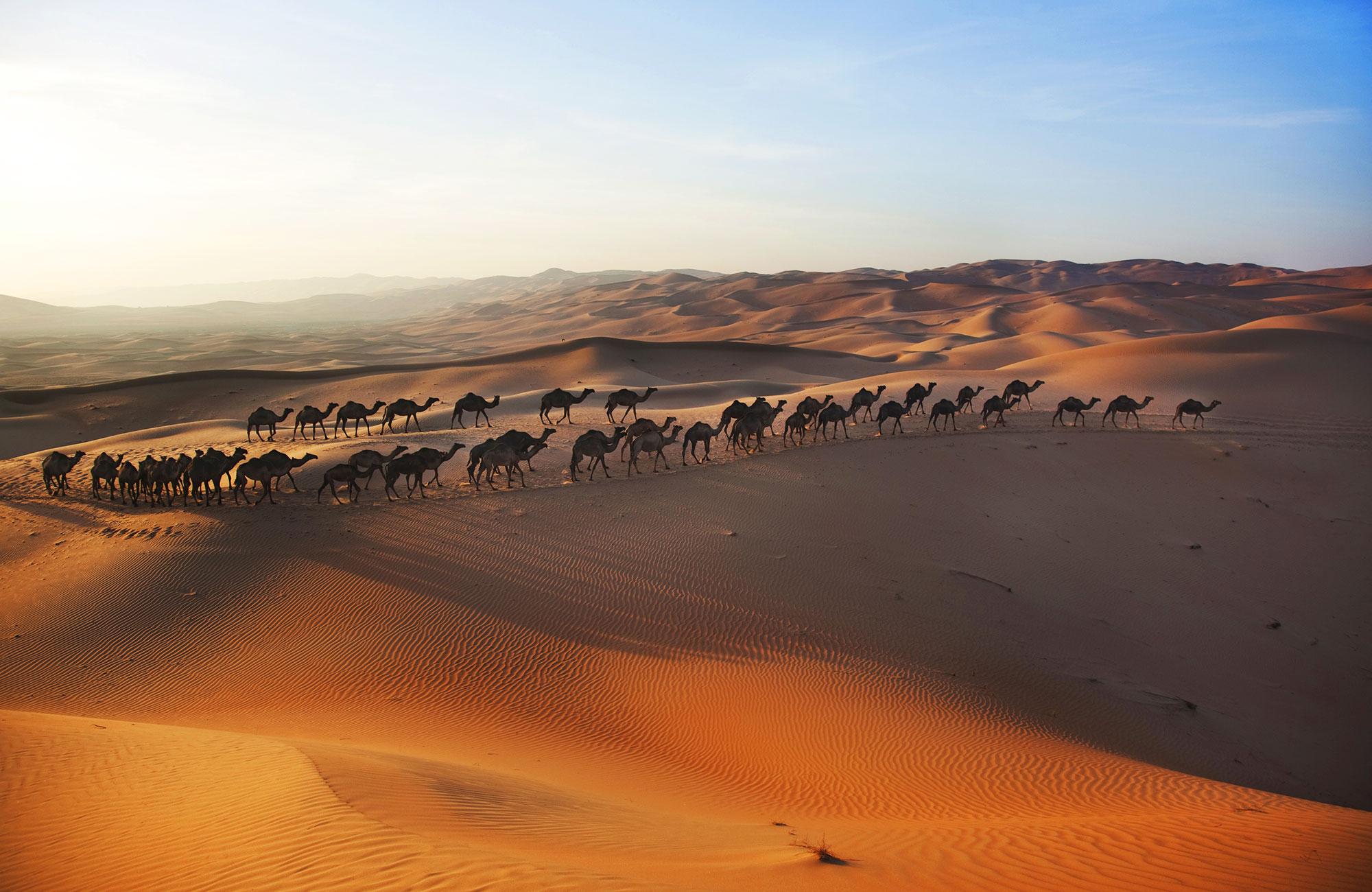 Desert à Abu Dhabi
