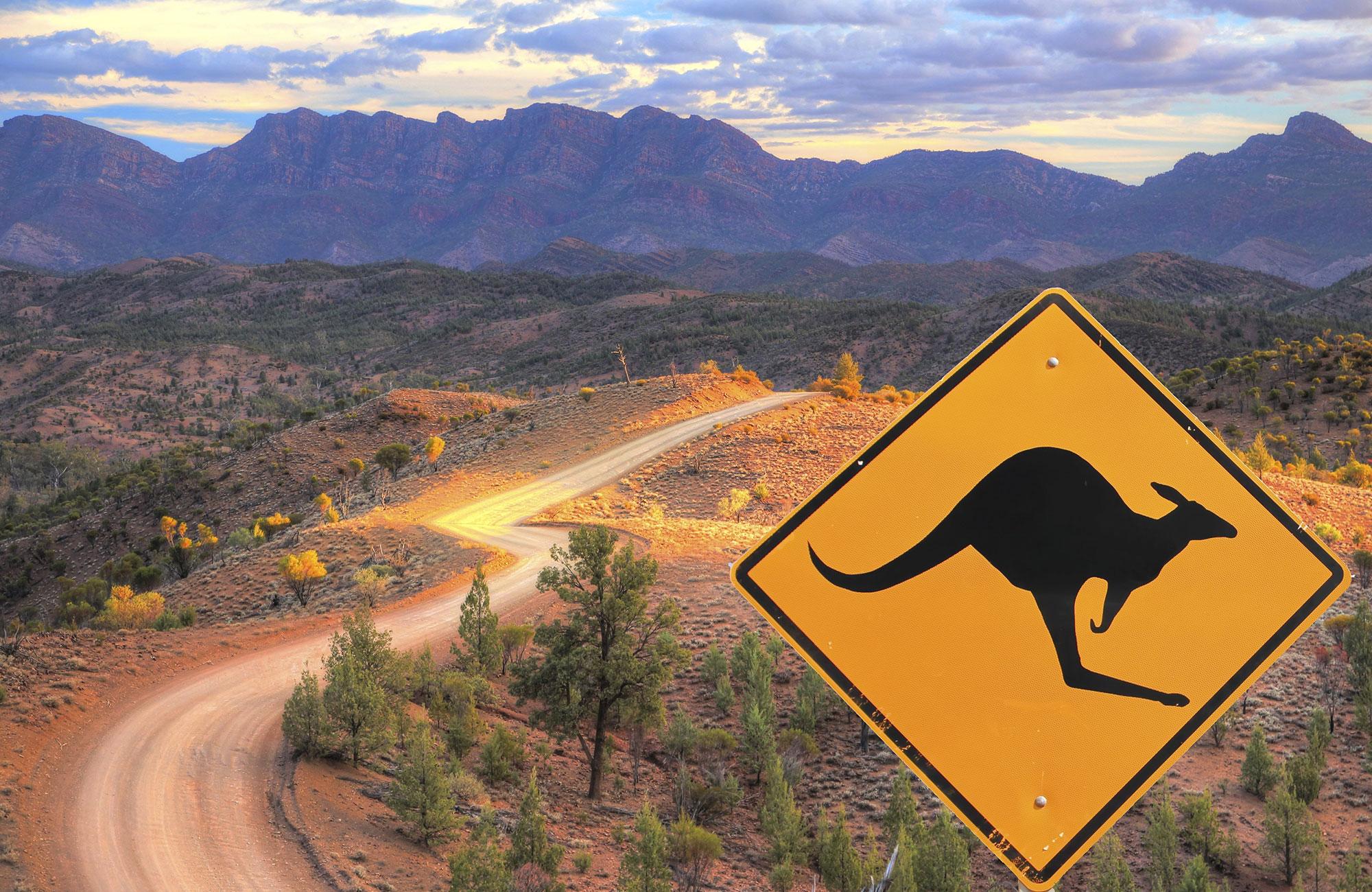Panneau kangourous dans le bush en Australie