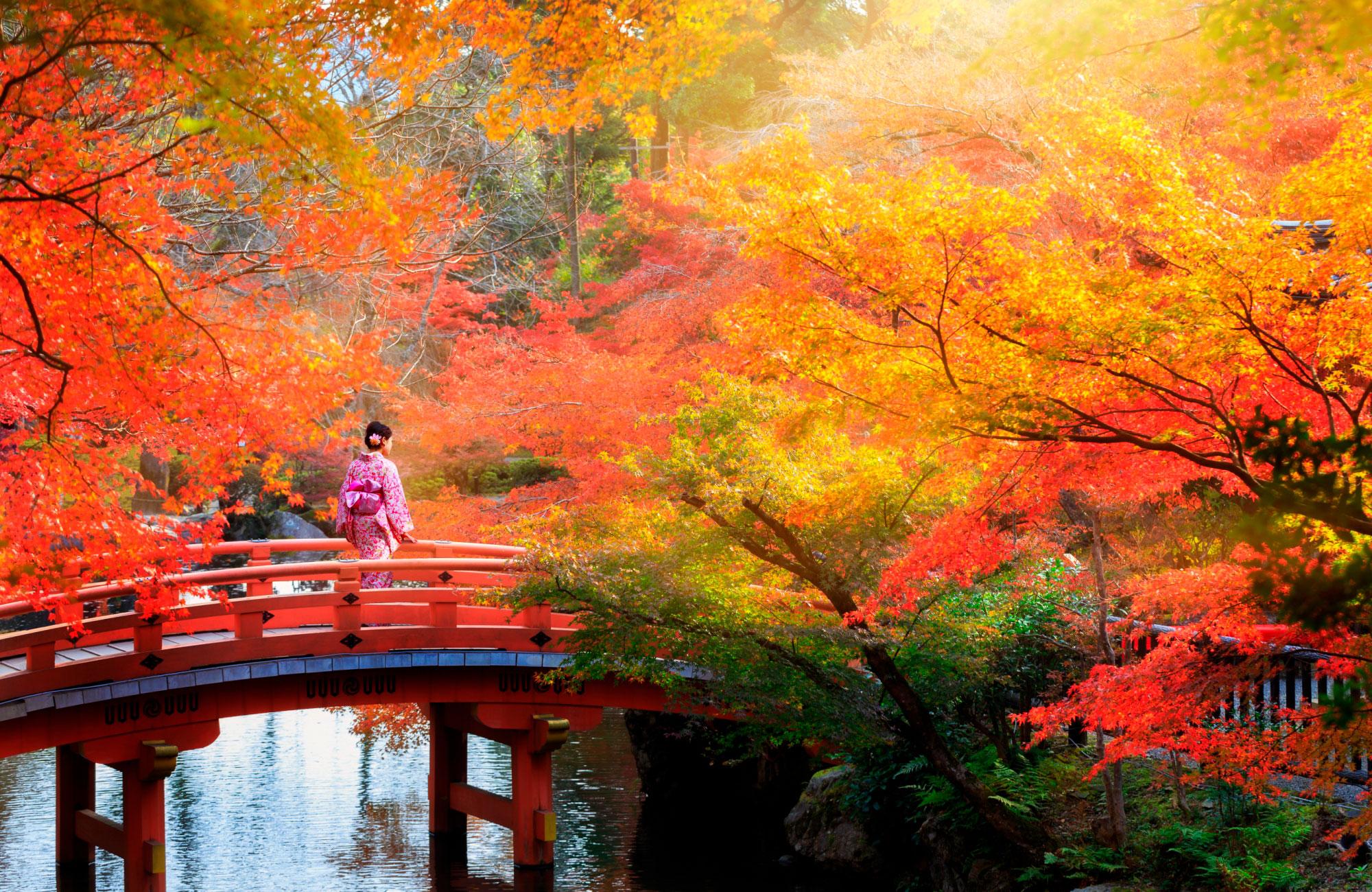 Parc automne à Kyoto