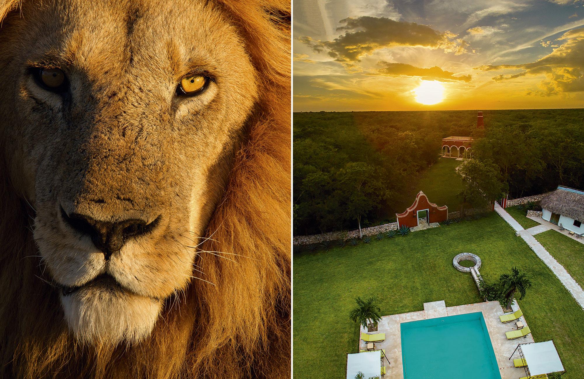 Lion afrique et hacienda ticum