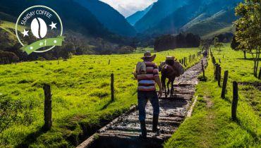 Voyage Colombie - Vallée de Cocora région du café - Amplitudes