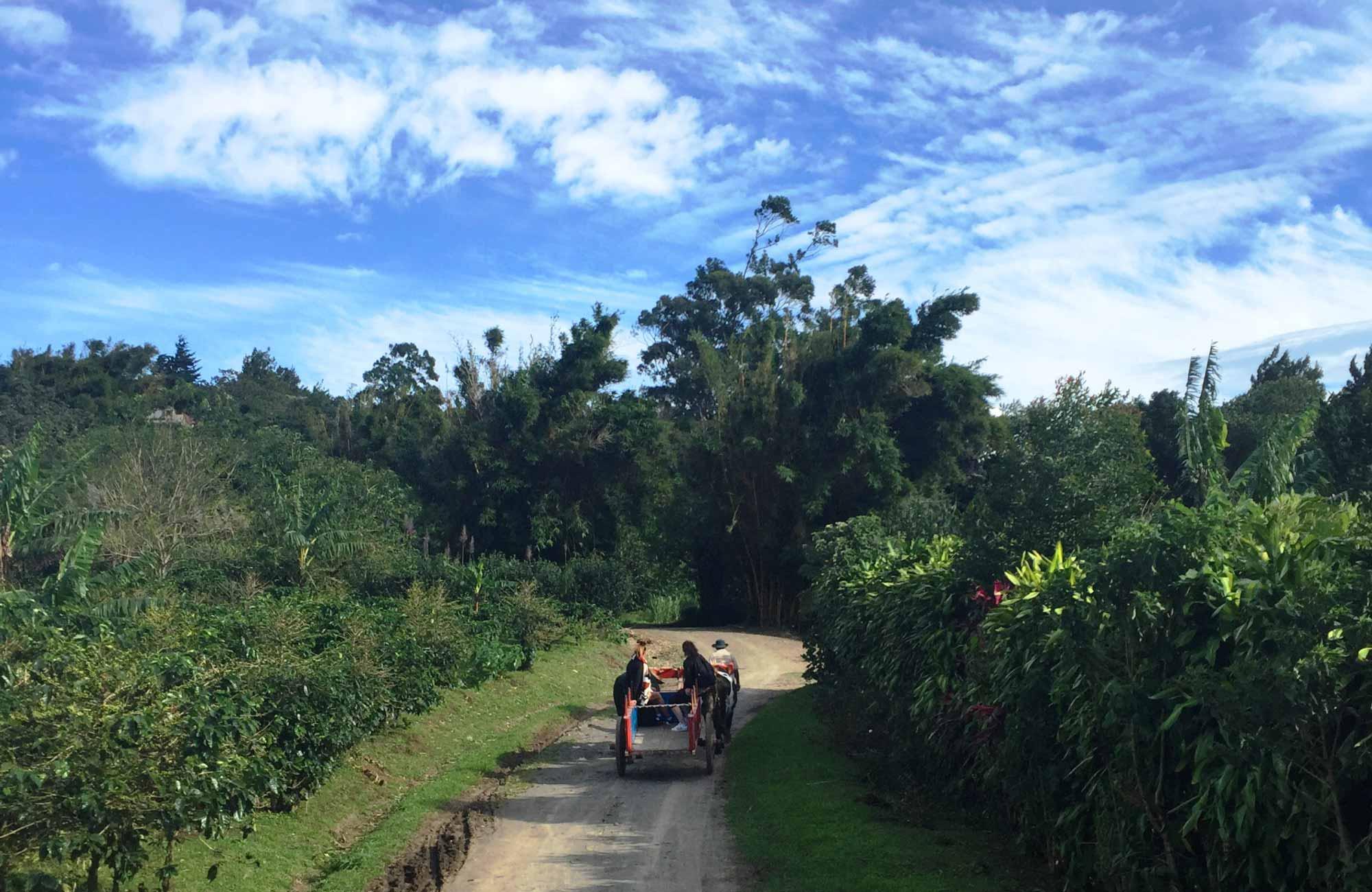 Voyage Costa Rica - Exploitation de café Don Juan à Monteverde - Amplitudes