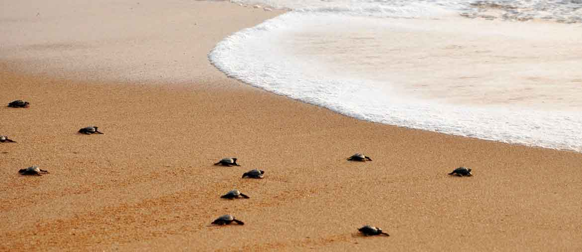 Pano-tortues
