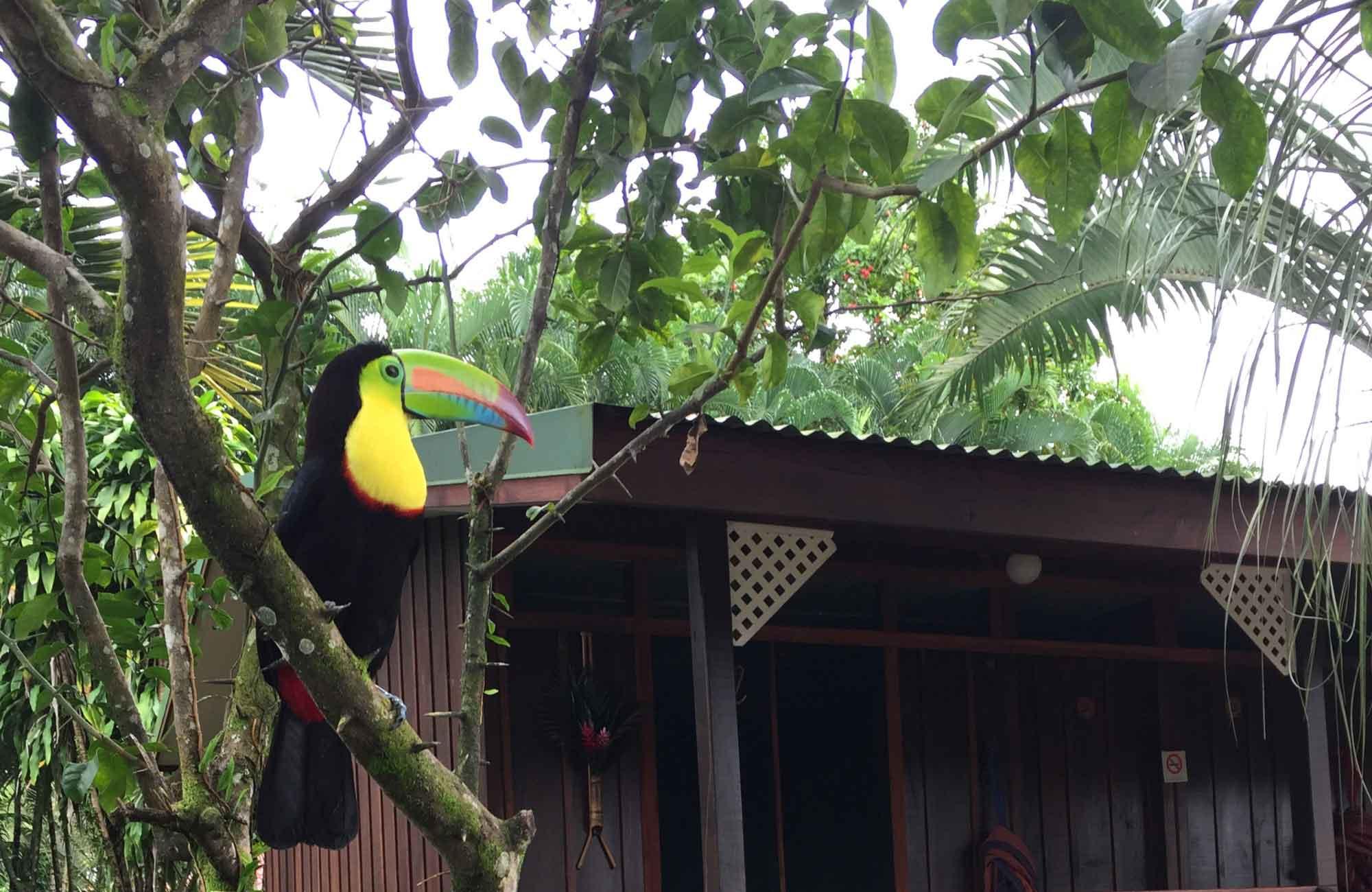 Voyage Costa Rica - Toucan - Amplitudes