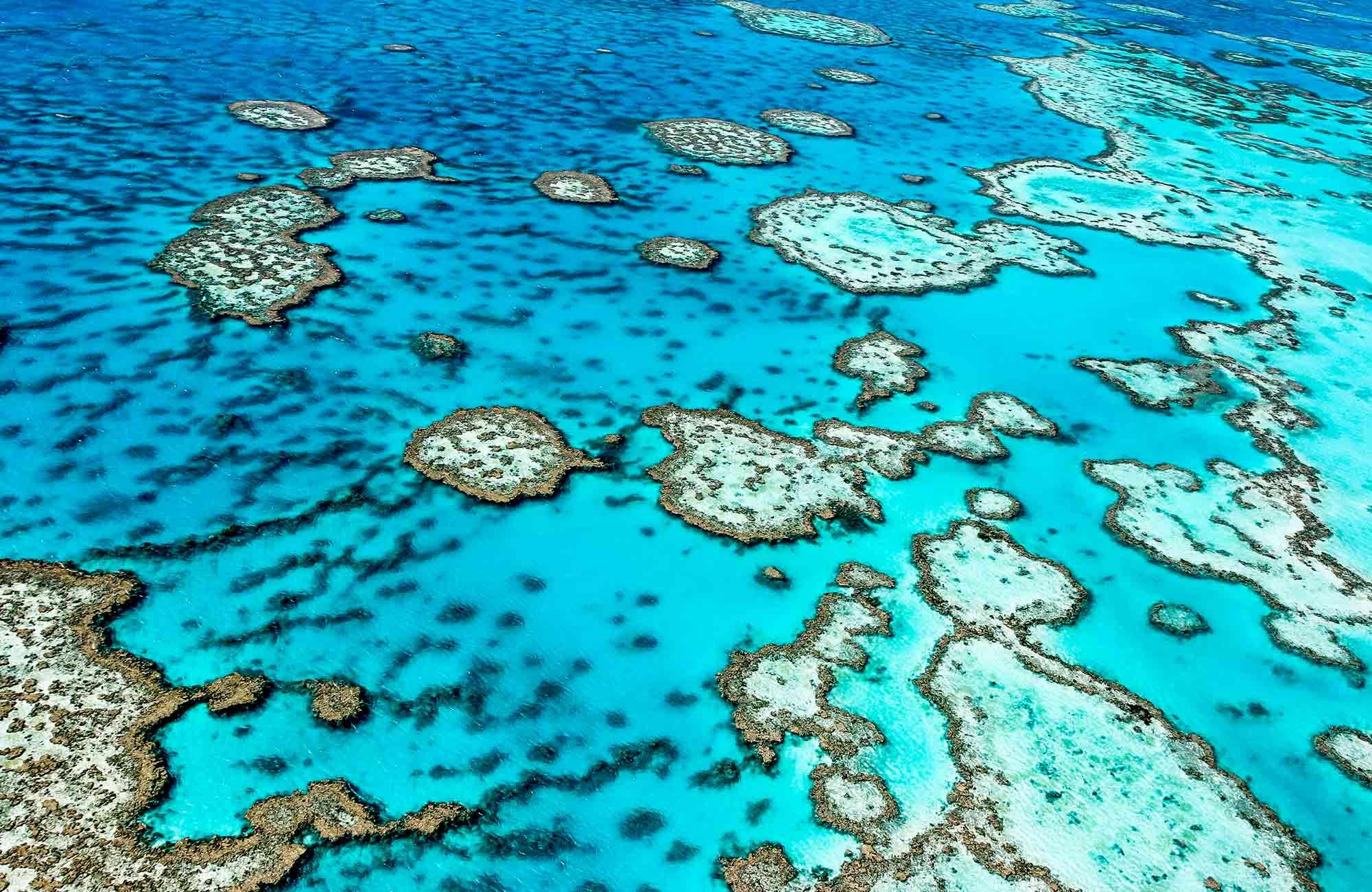 La Grande Barrière de corail, un écosystème inestimable