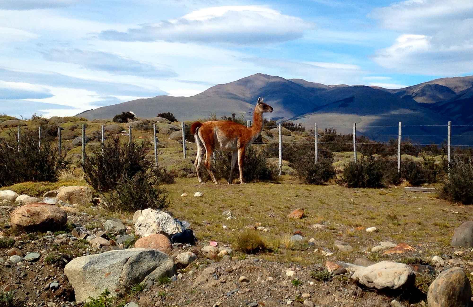 Voyage Chili - Guanaco - Amplitudes