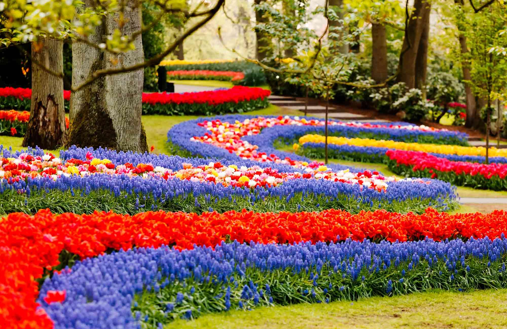 Voyage Pays-Bas - Jardins de Keukenhof - Amplitudes
