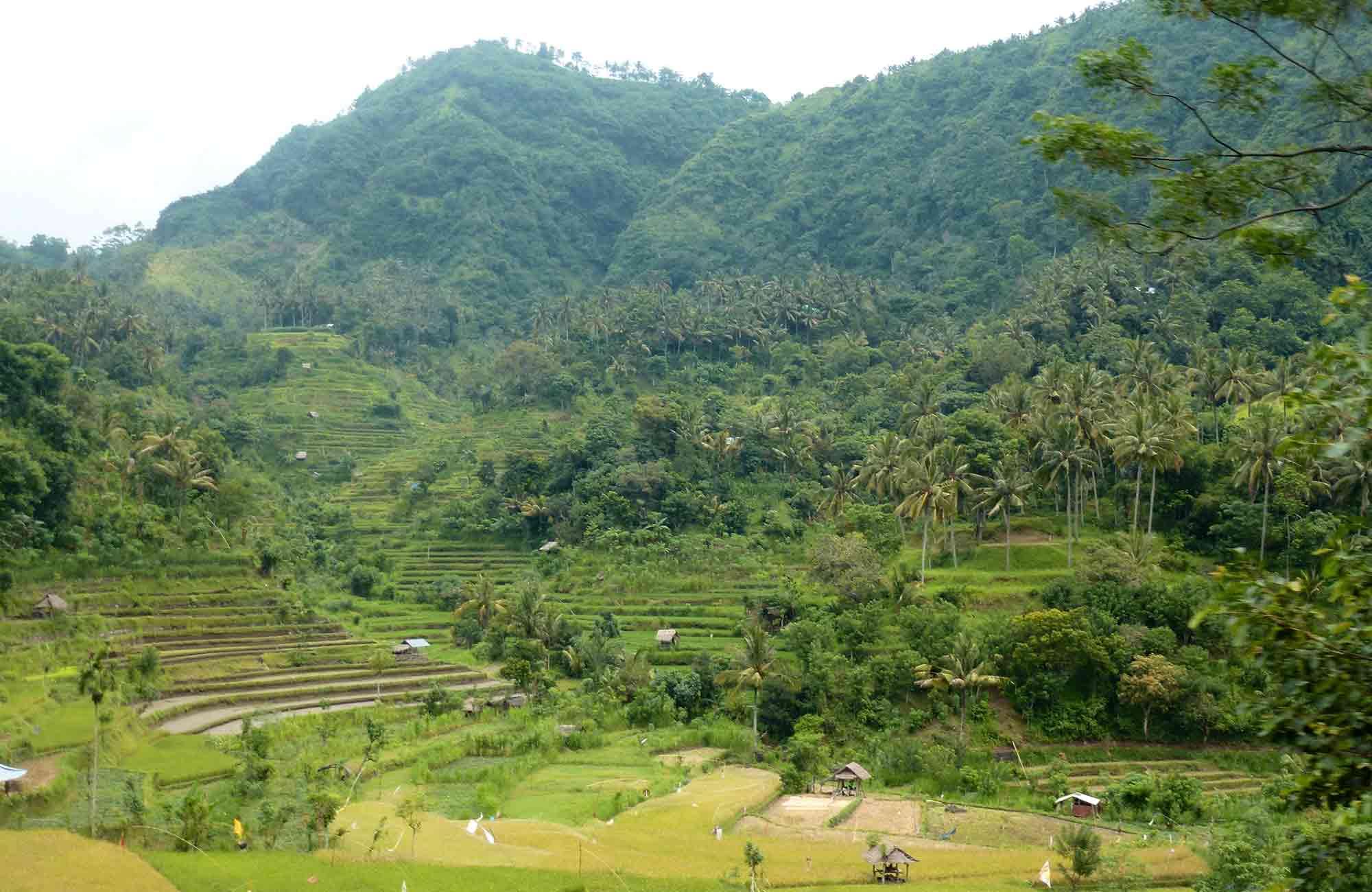 Voyage Indonésie - Rizières Bali - Amplitudes