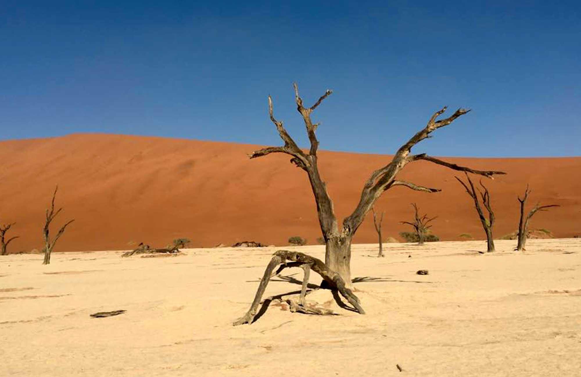 Voyage Namibie - Arbre pétrifié Désert du Namib - Amplitudes