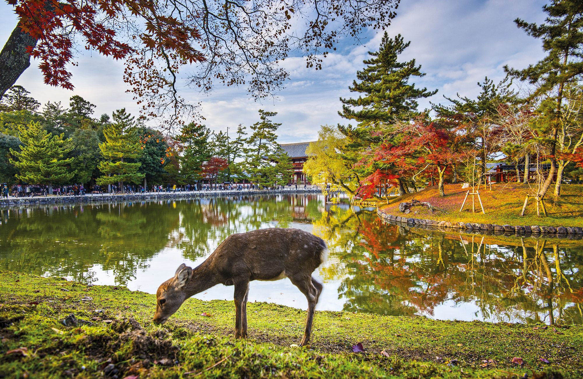Voyage Japon - Parc de Nara Automne - Amplitudes
