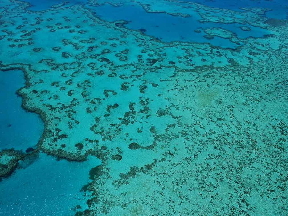 Australie-plongée-barrière-corail-Amplitudes