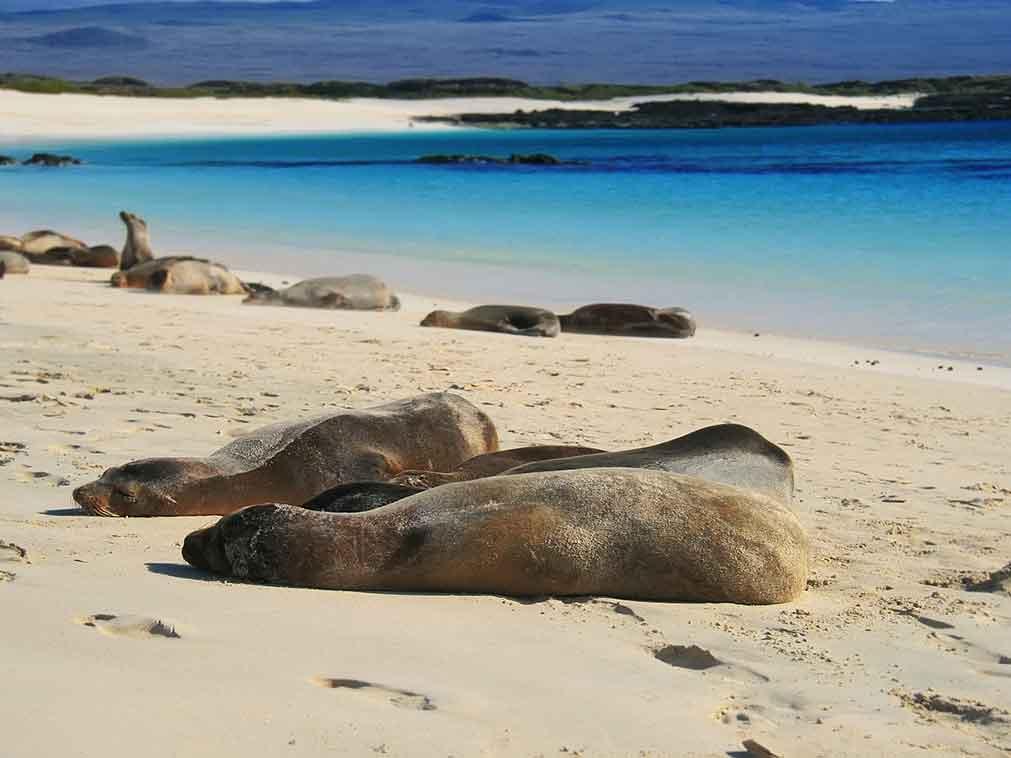 Galapagos-Equateur-plongée-Amplitudes