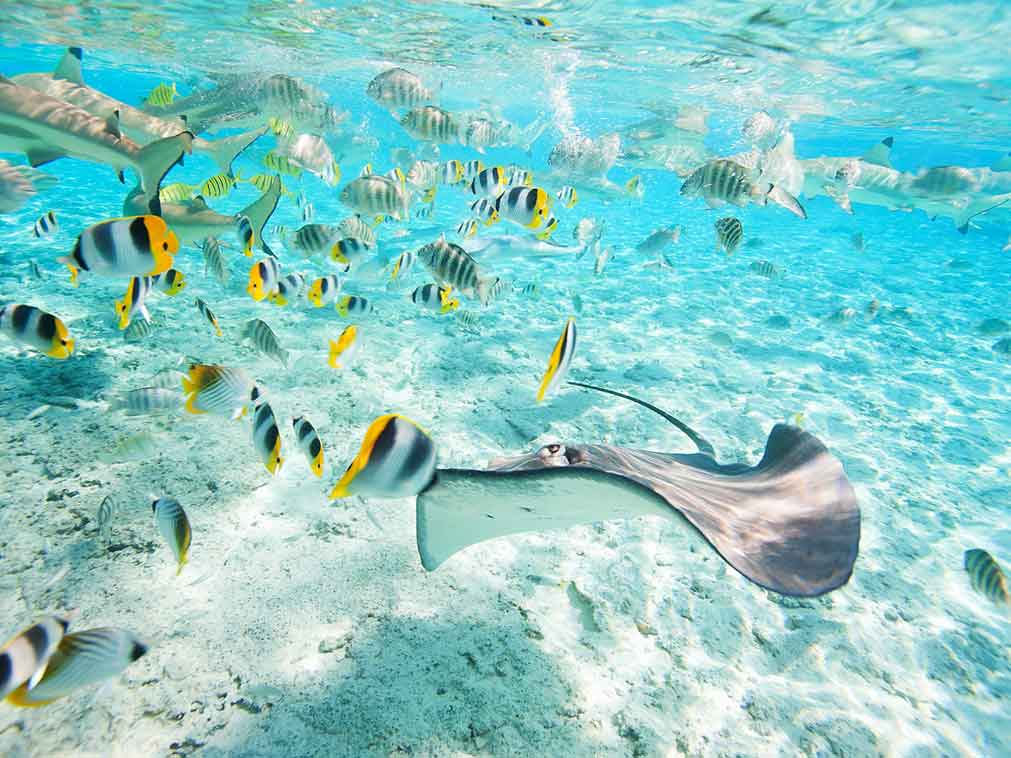 Indonésie-plongée-Amplitudes