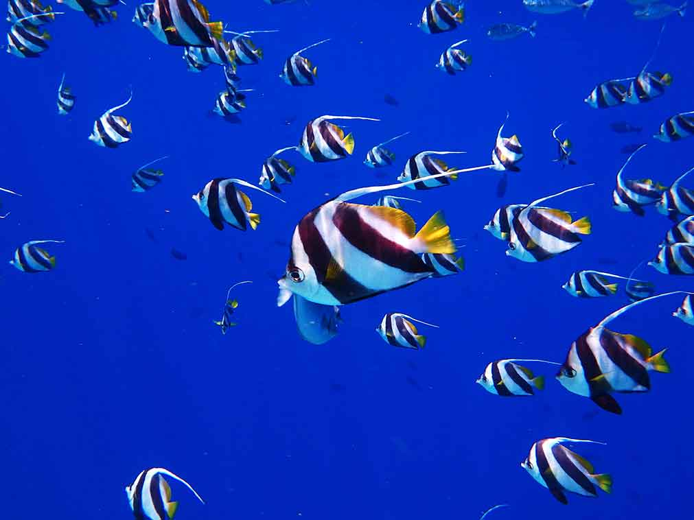 Maldives-plongée-Amplitudes