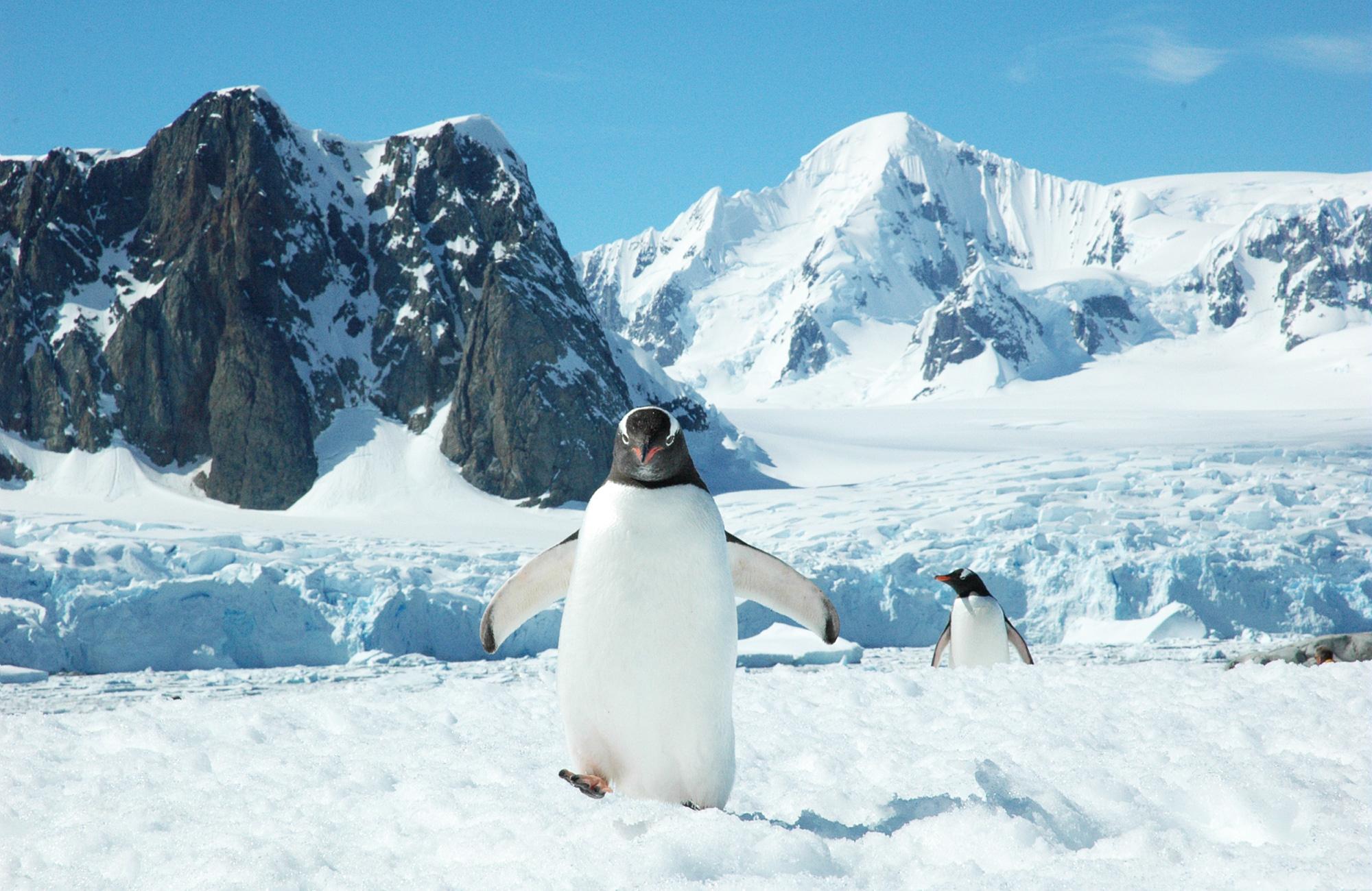 antarctique-manchot-amplitudes
