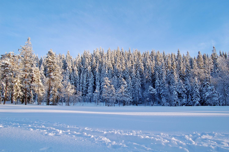 Voyage Norvège - Forêt Sapin OsloMarka - CREDIT oaø