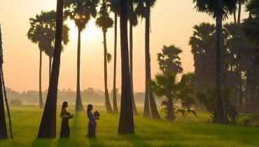 Bali-rizières-Amplitudes