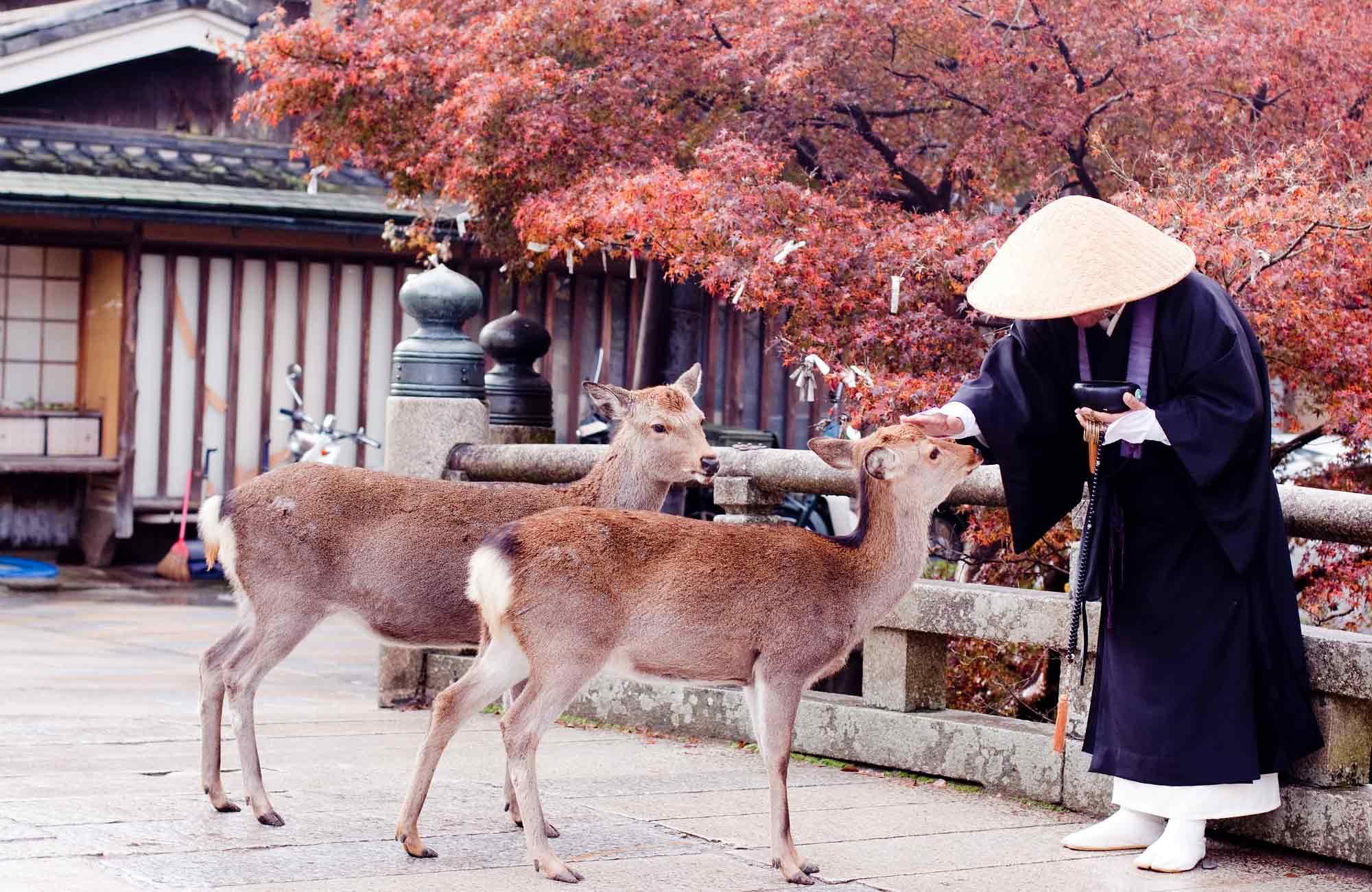 Cerf-Nara-Japon-conseils-Instagram-Amplitudes
