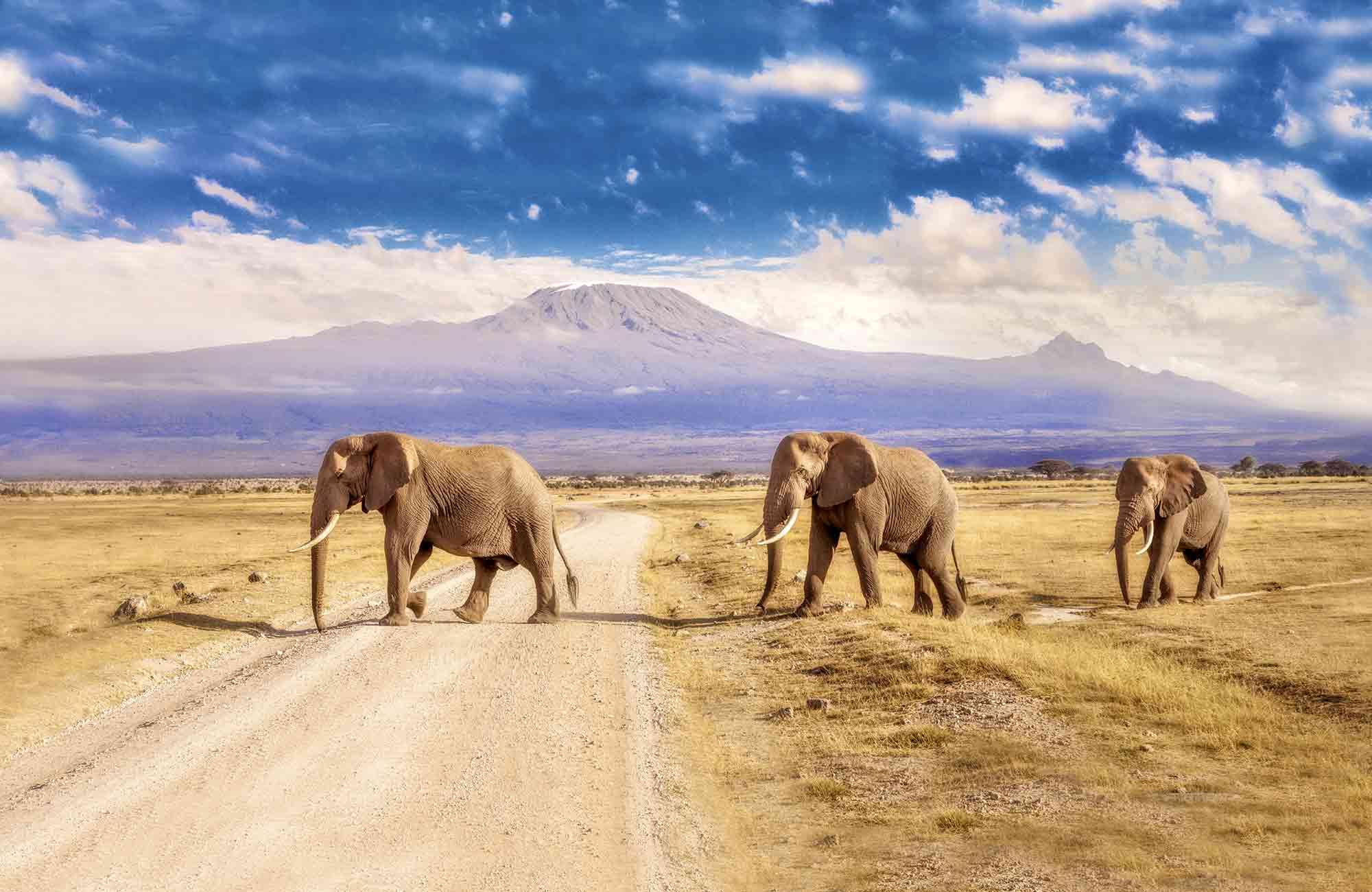 Voyage Kenya - Elephants - Amplitudes