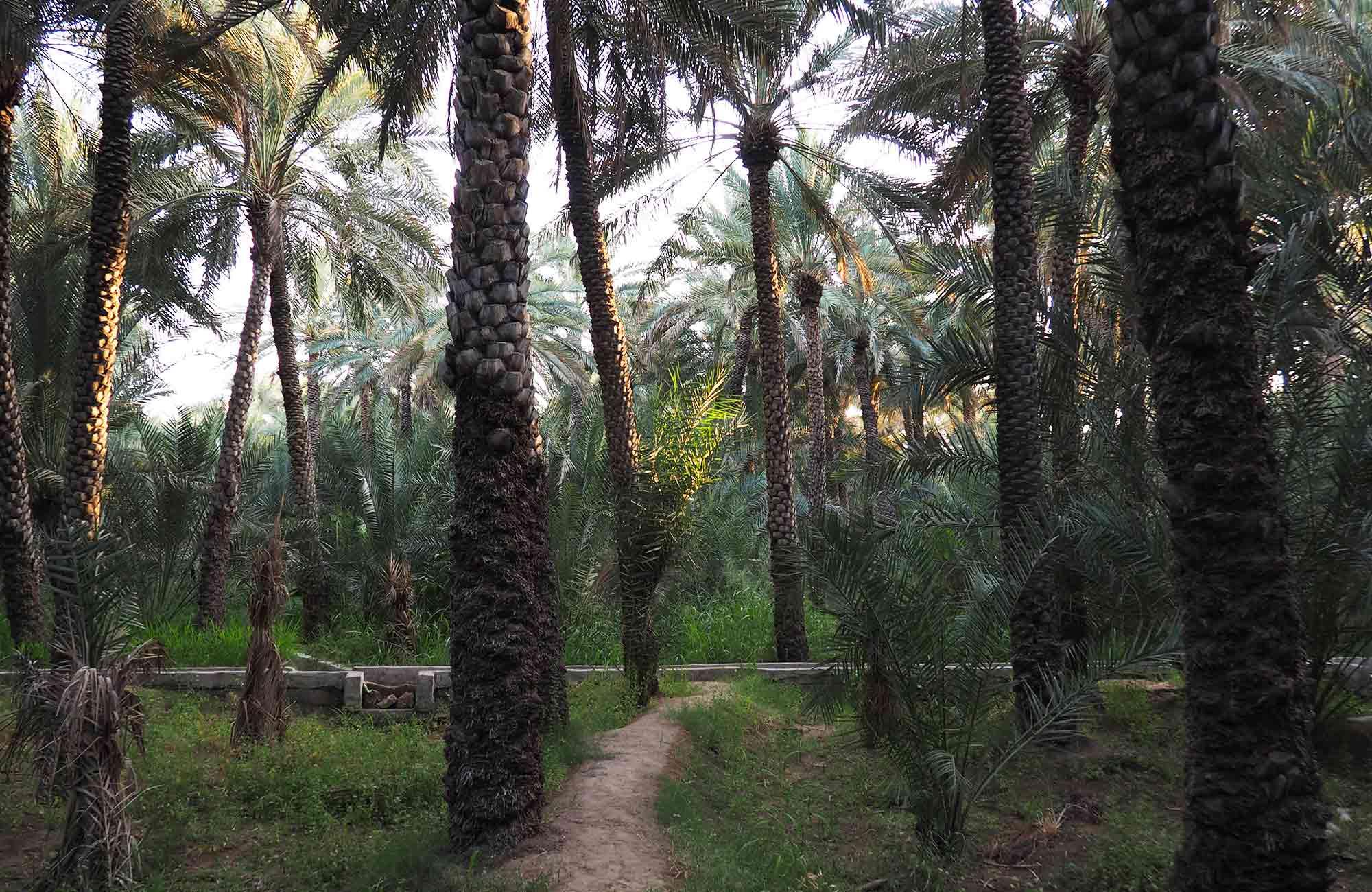 Voyage Abu Dhabi - Al-Aïn Palmeraie - Amplitudes