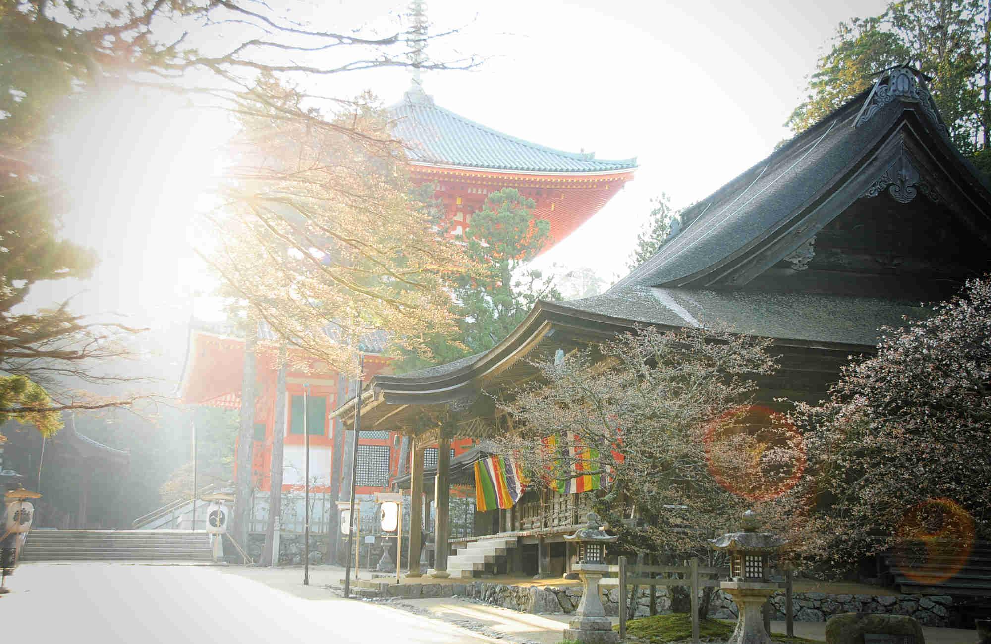 Printemps et Hanami au Koayasan au Japon en voyage avec Amplitudes
