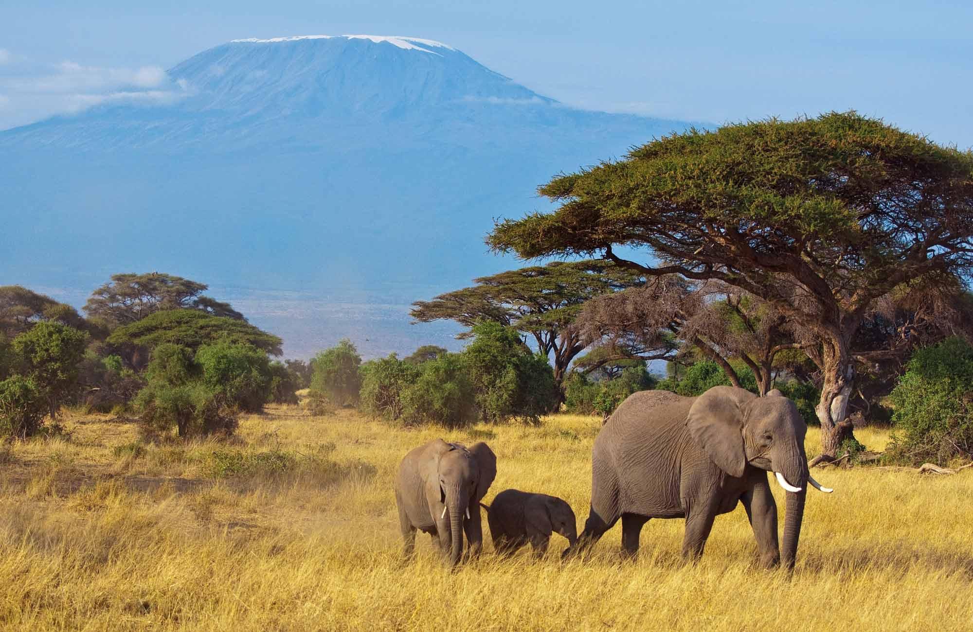 Elephants devant le Kilimandjaro en Tanzanie