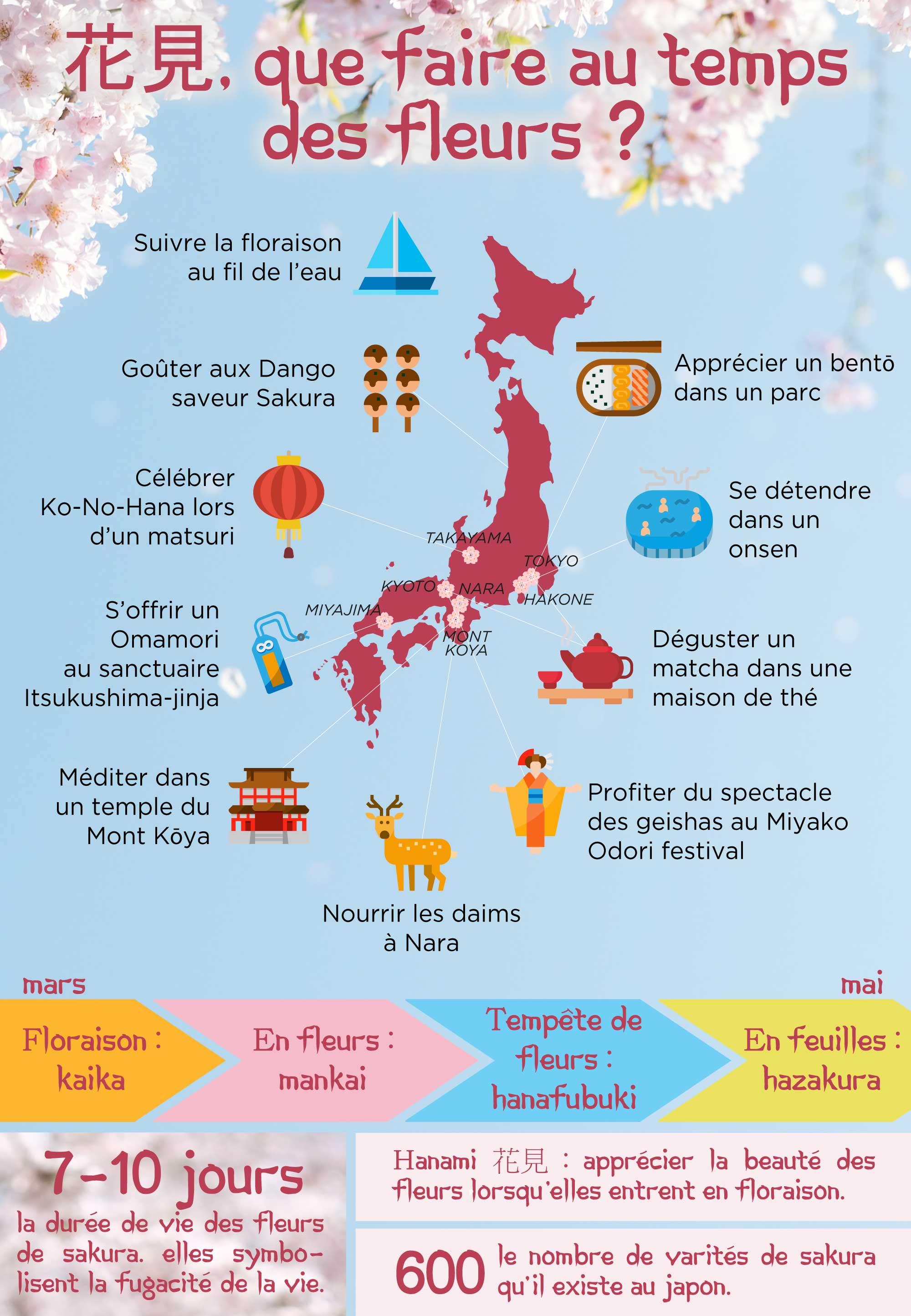 Voyage Japon - Infographie Hanami - Amplitudes