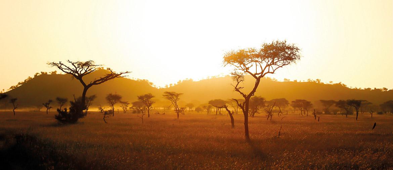 Golden hour sur la savane en Tanzanie avec Amplitudes