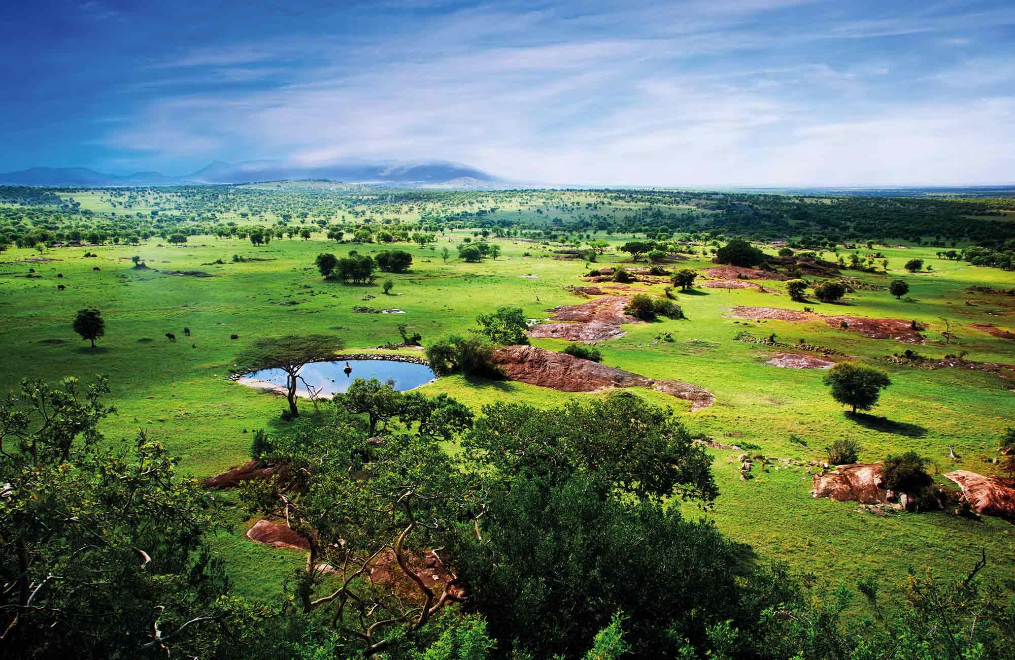Parc national de Serengeti en Tanzanie par Amplitudes voyage