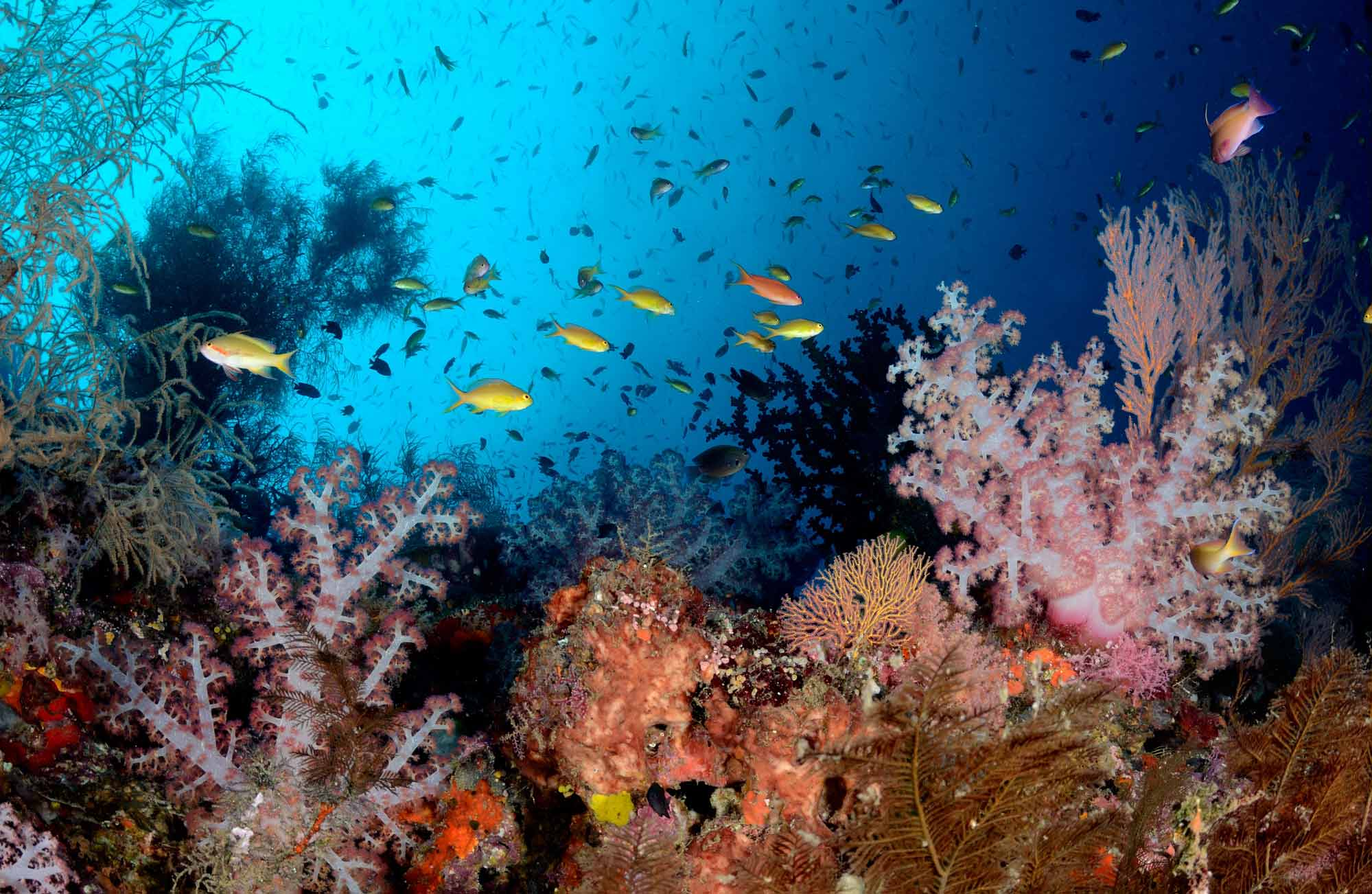 plongée-corail-snorkeling-indonésie-amplitudes-voyage
