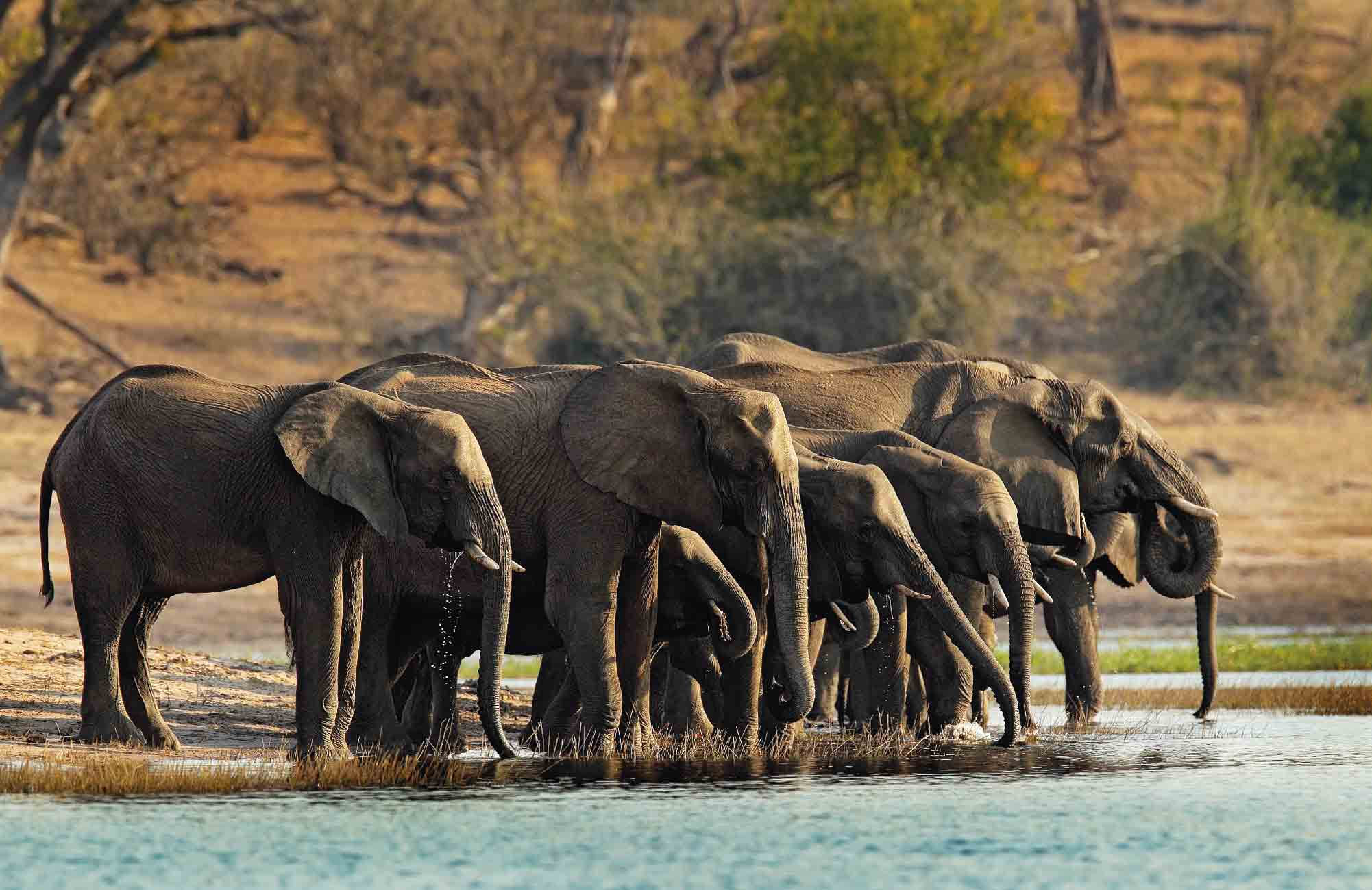 Croisière safari sur le fleuve Chobé