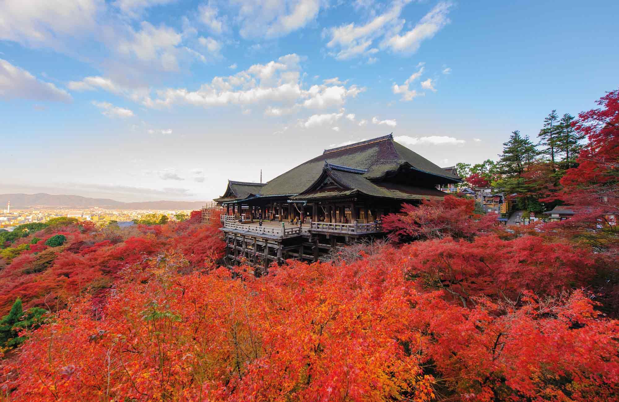 momijigari en automne, meilleure période pour partir au Japon par Amplitudes