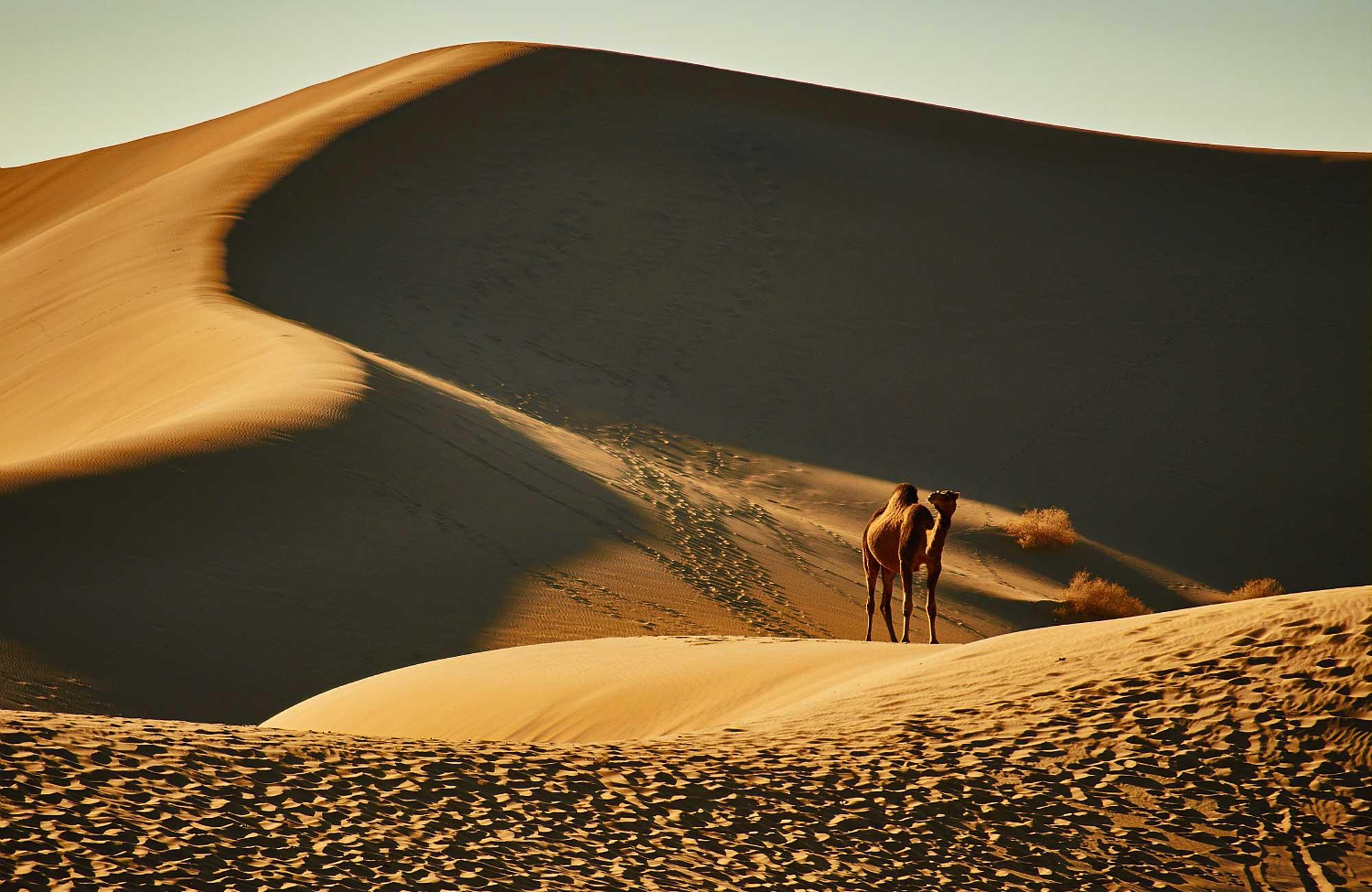 Voyage Oman - Désert Wahiba Sands - Amplitudes