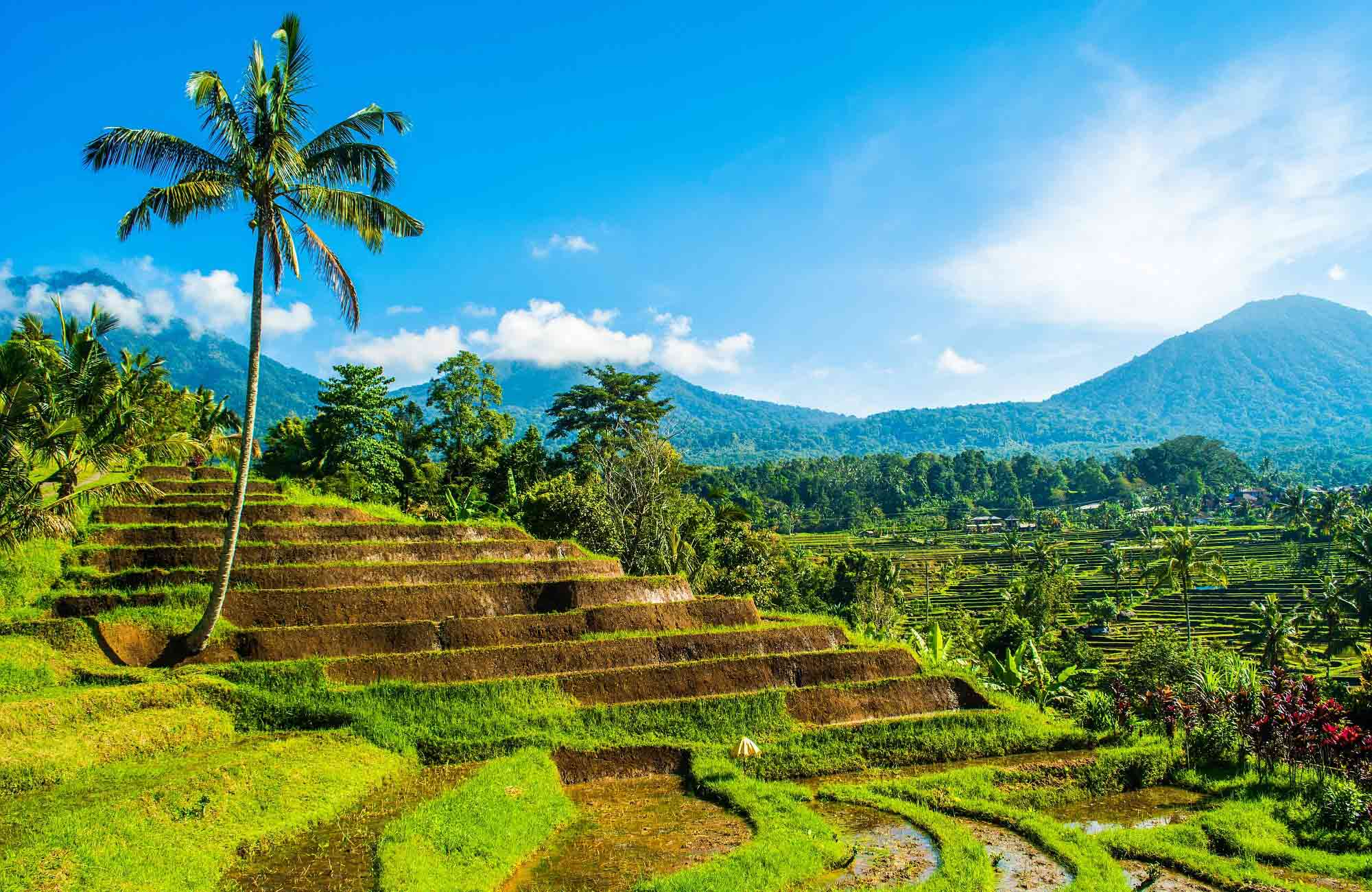 Voyage Indonésie - Bali rizières - Amplitudes