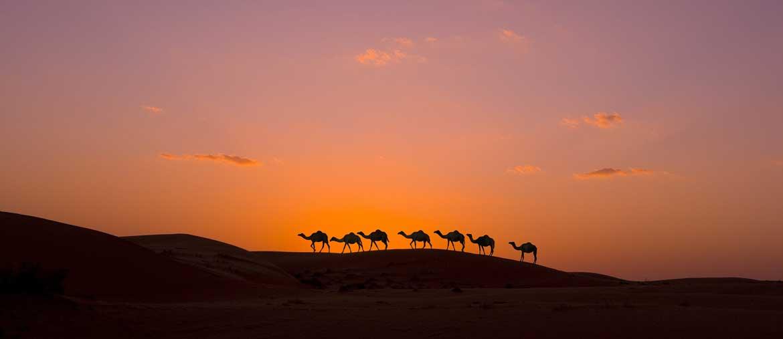 Voyage Oman - Wahiba Sands - Amplitudes
