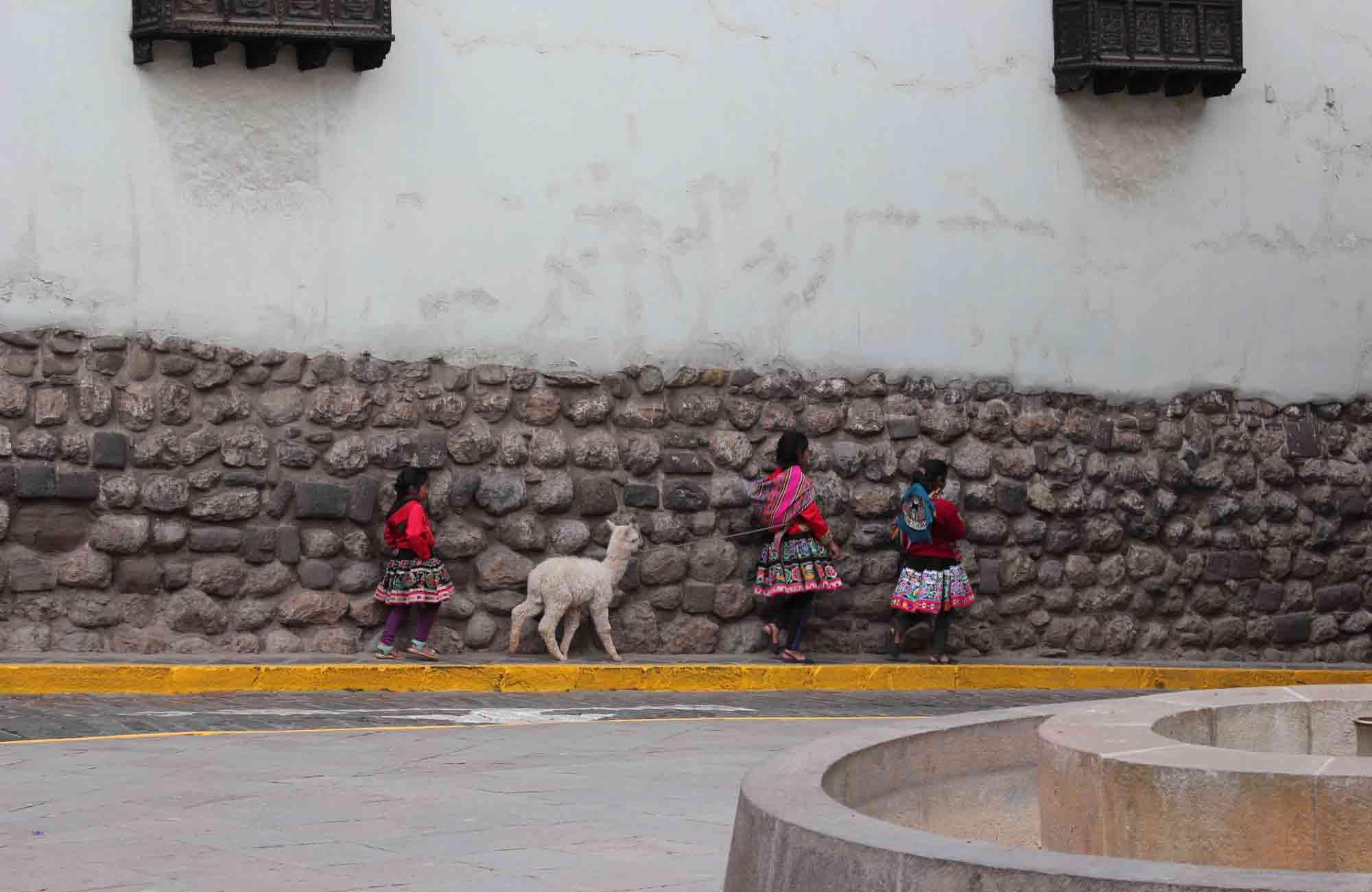 Voyage Pérou - Cusco lama alpaga - Amplitudes