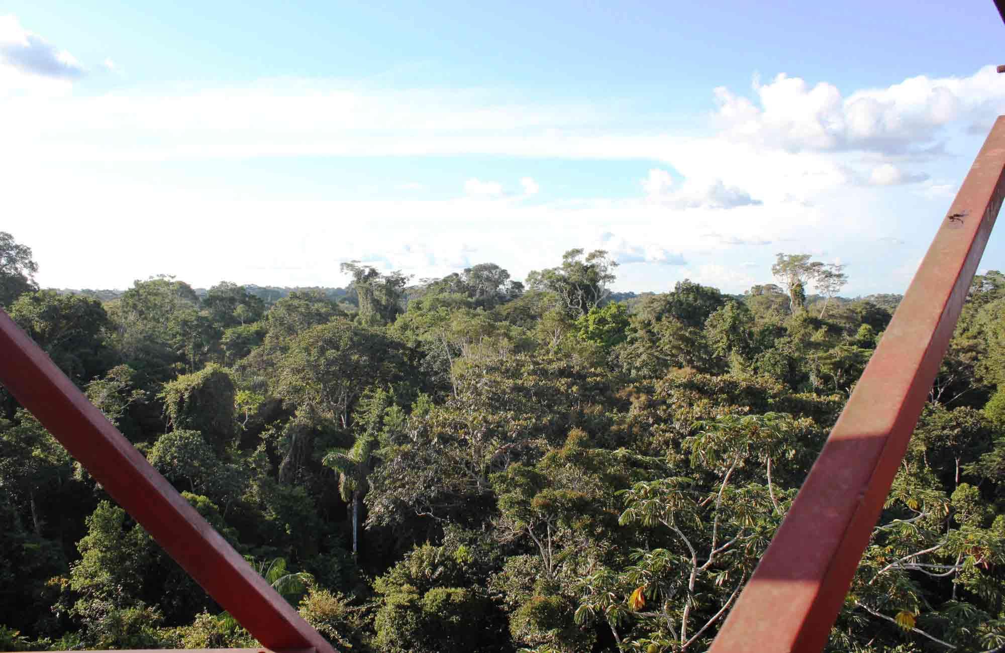 Voyage Pérou - Amazonie Canopée - Amplitudes