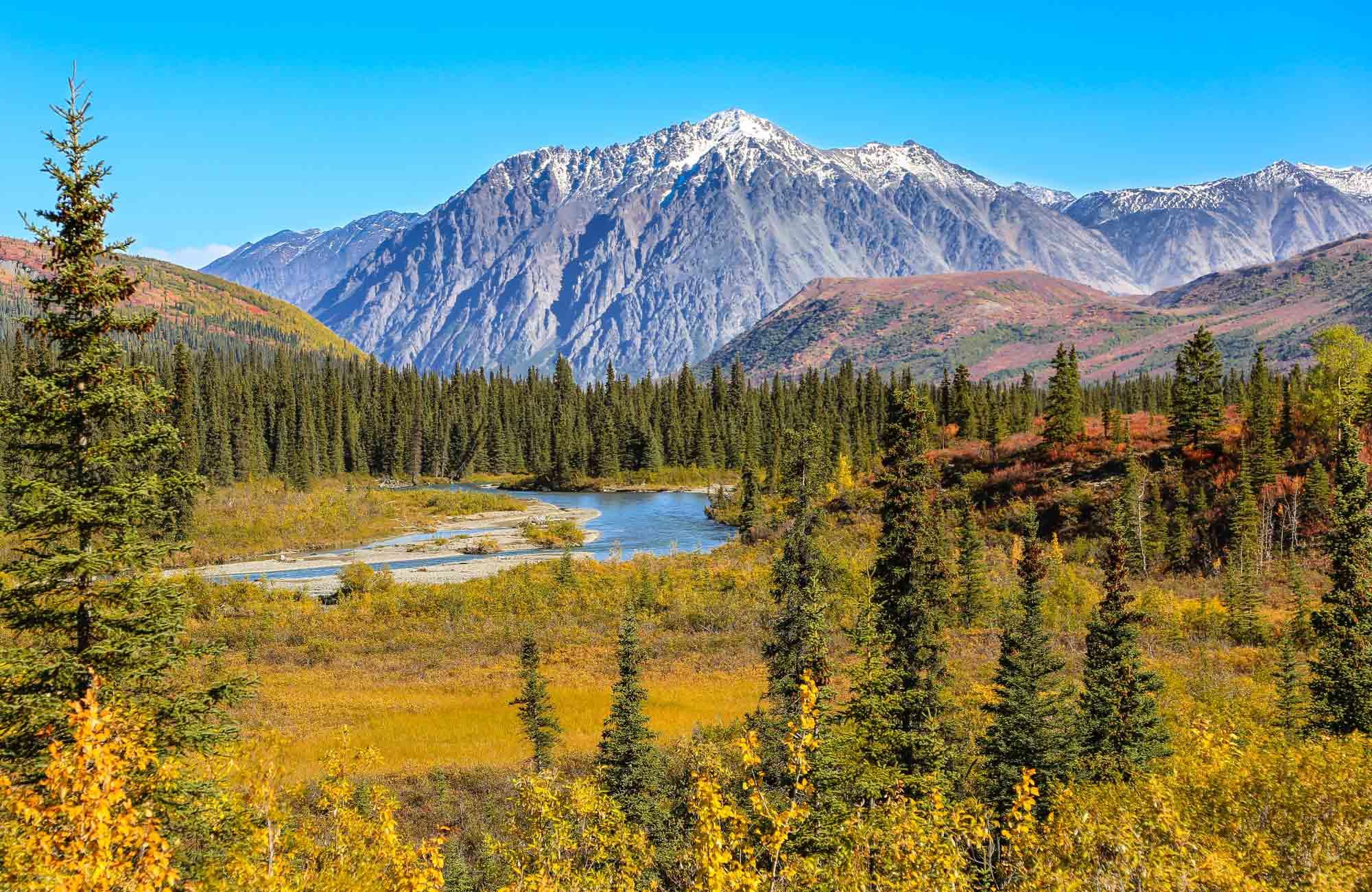 Voyage Alaska - Parc-National-de-Denali - Amplitudes