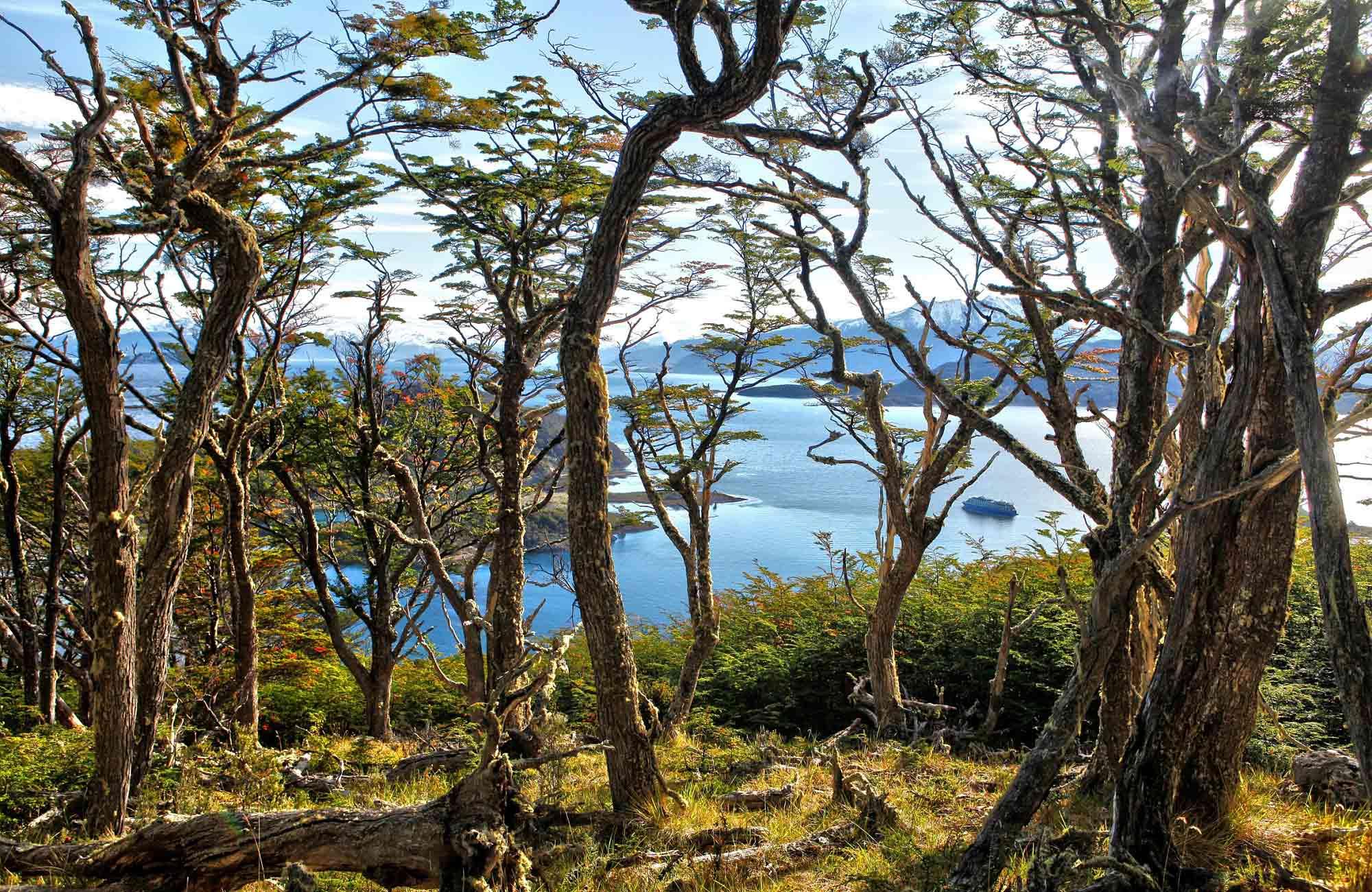 Croisière Chili - Baie de Wulaia - Amplitudes