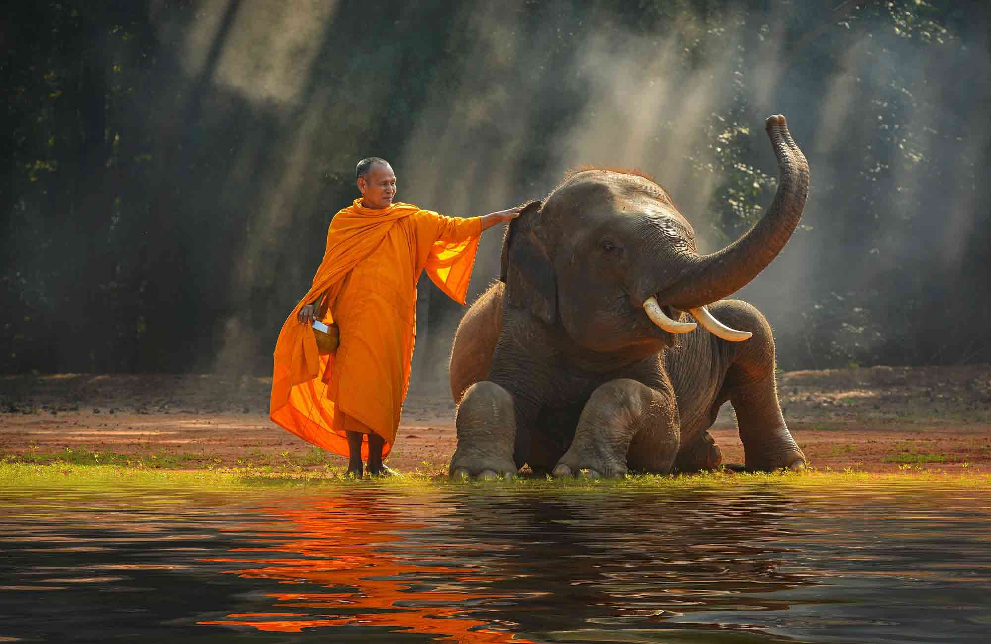 Voyage Thaïlande -Elephant - Amplitudes