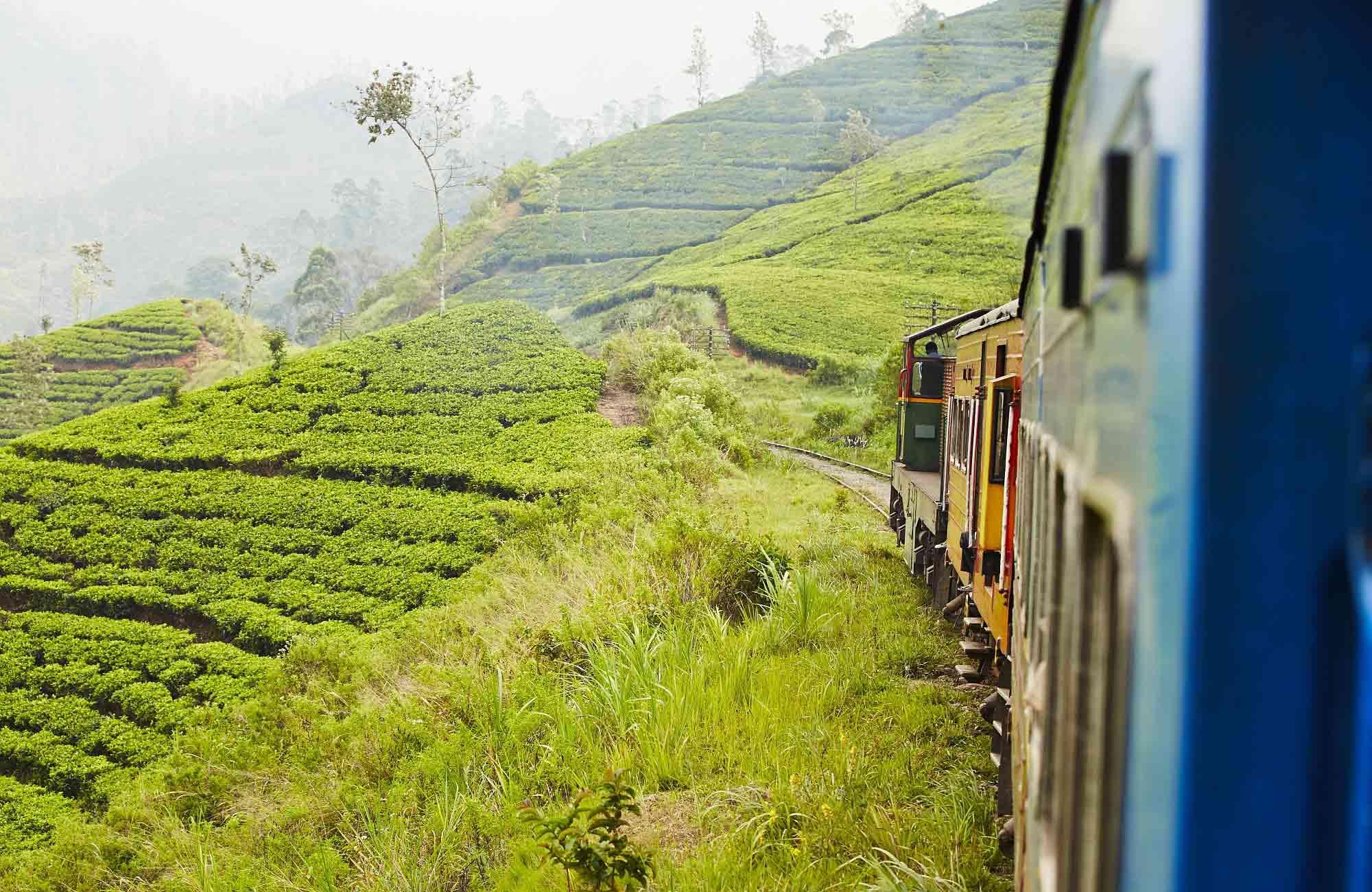 Voyage Sri Lanka -plantations de thé-train- Amplitudes