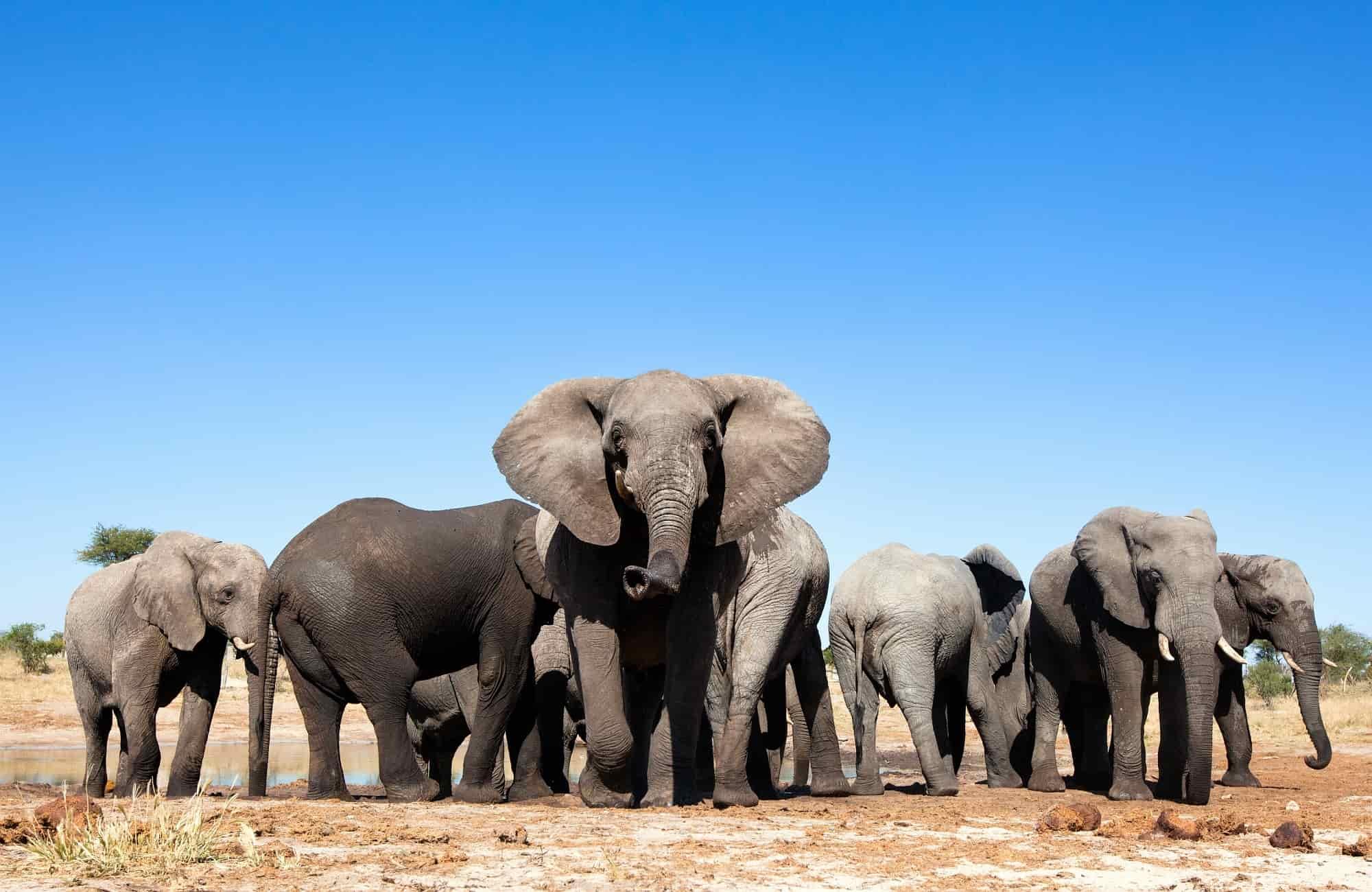 Voyage Zimbabwe - Elephants - Amplitudes