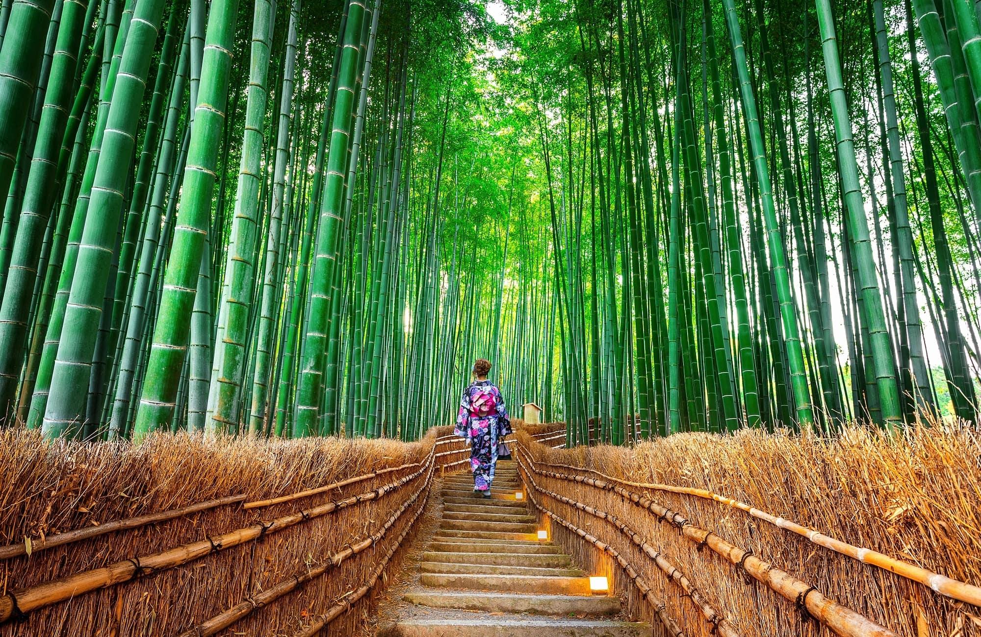 Jeune femme en Kimono dans la forêt de bambou à Kyoto