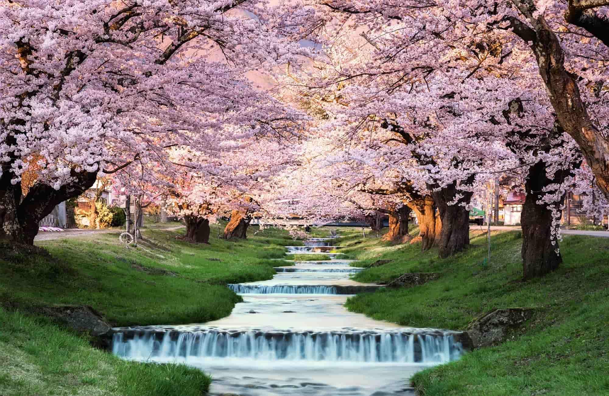Voyage Japon printemps - Fukushima - Amplitudes