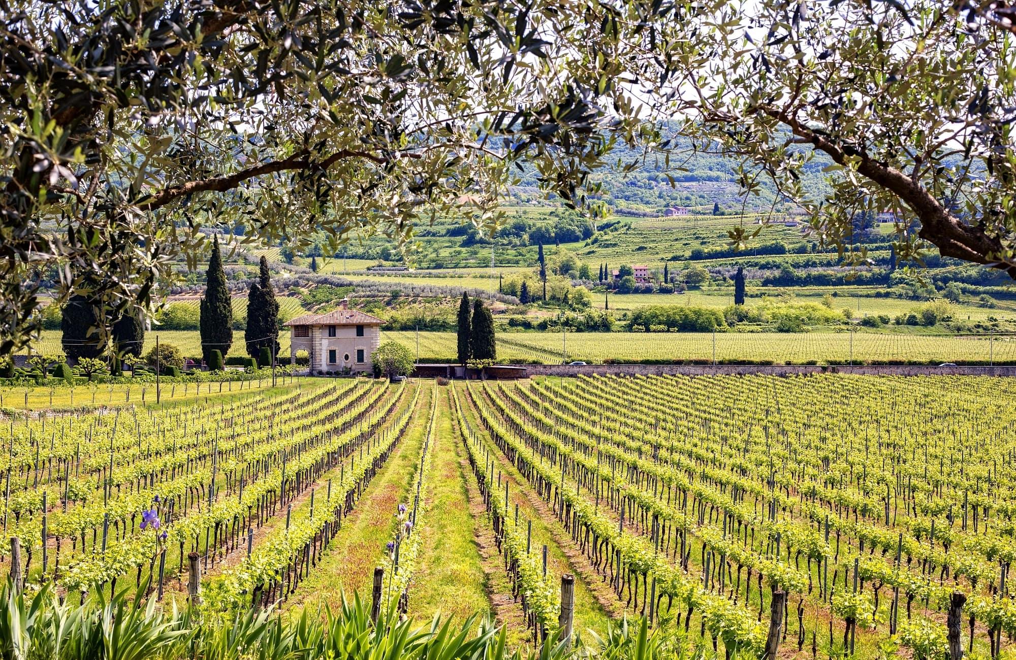 oenotourisme dans les terres toscannes !