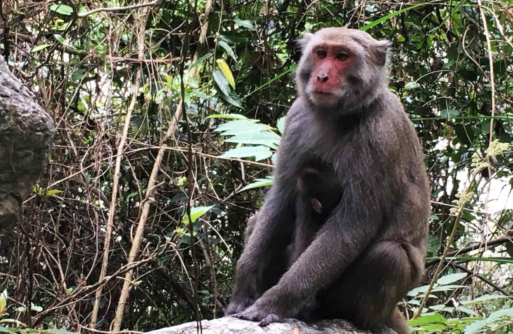 Voyage à Taïwan - Baiyang Trail - Amplitudes