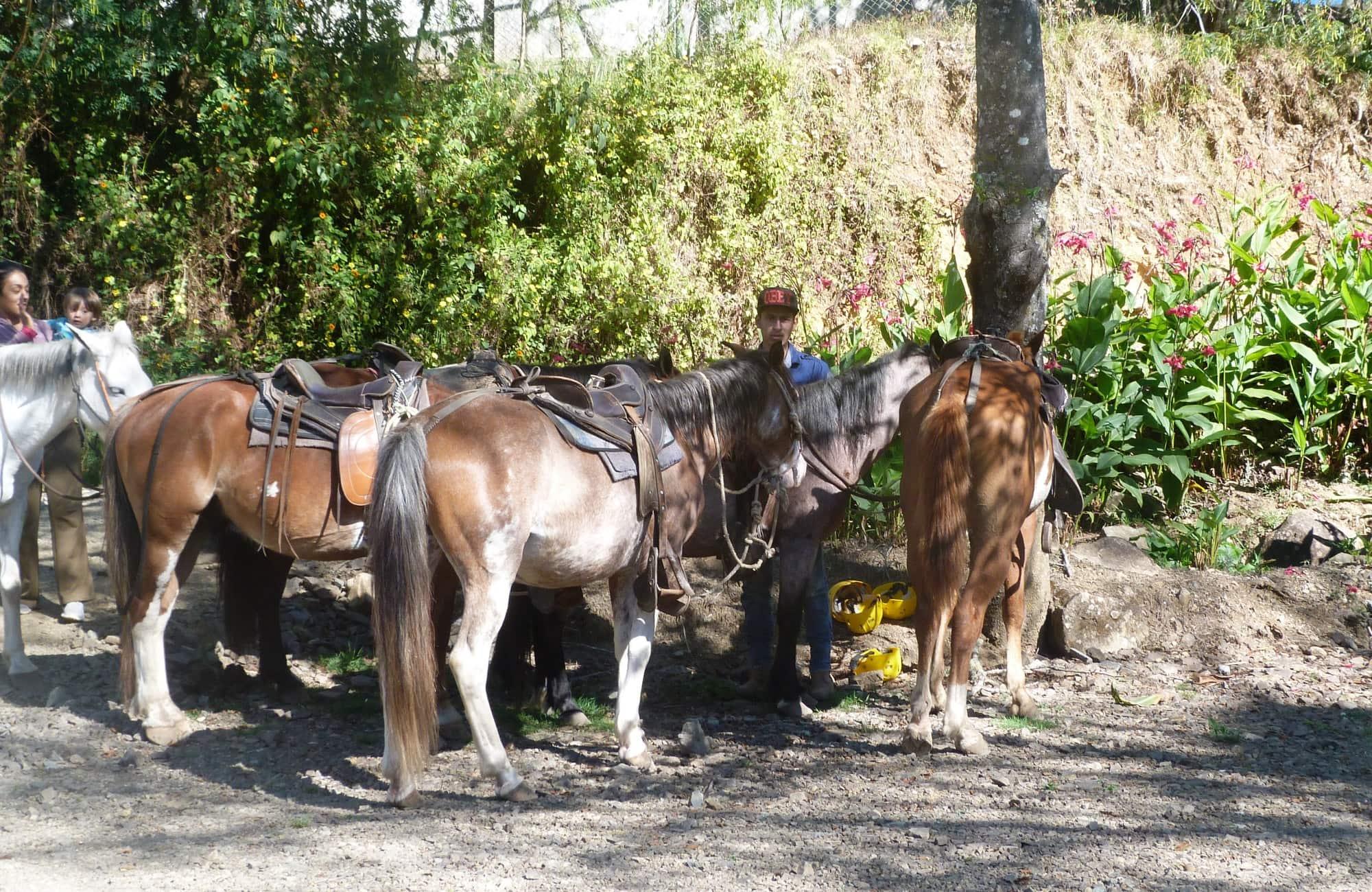 Les chevaux prêt à être monté pour une belle randonnée