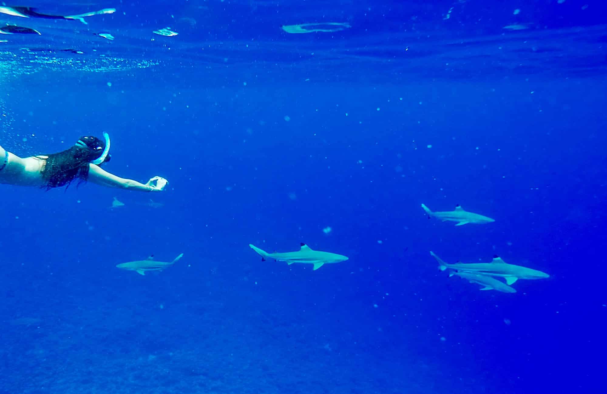 Voyage à Tahiti - Bora Bora - Amplitudes