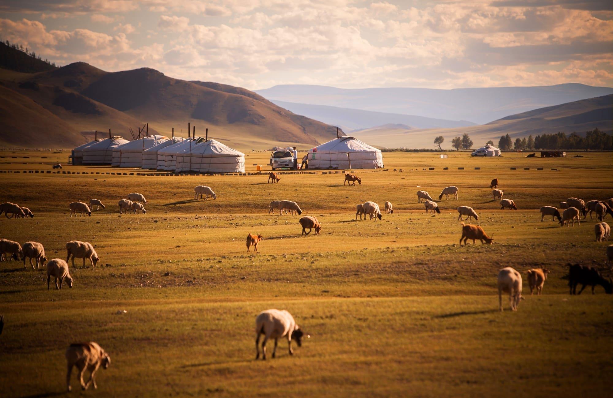 Campement de yourtes dans les steppes mongole