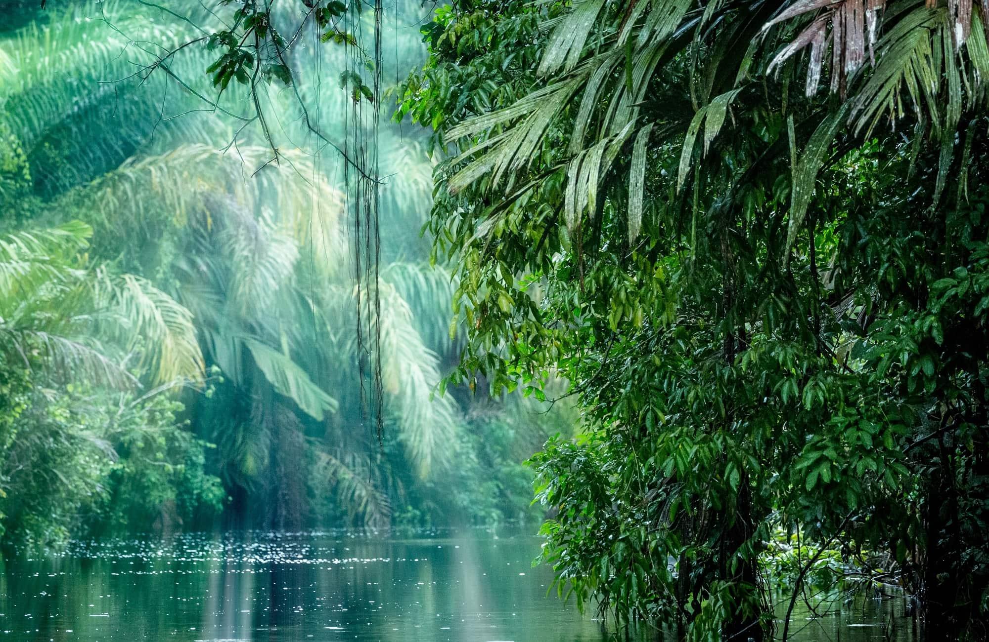 Voyage au milieu d'une forêt costaricienne